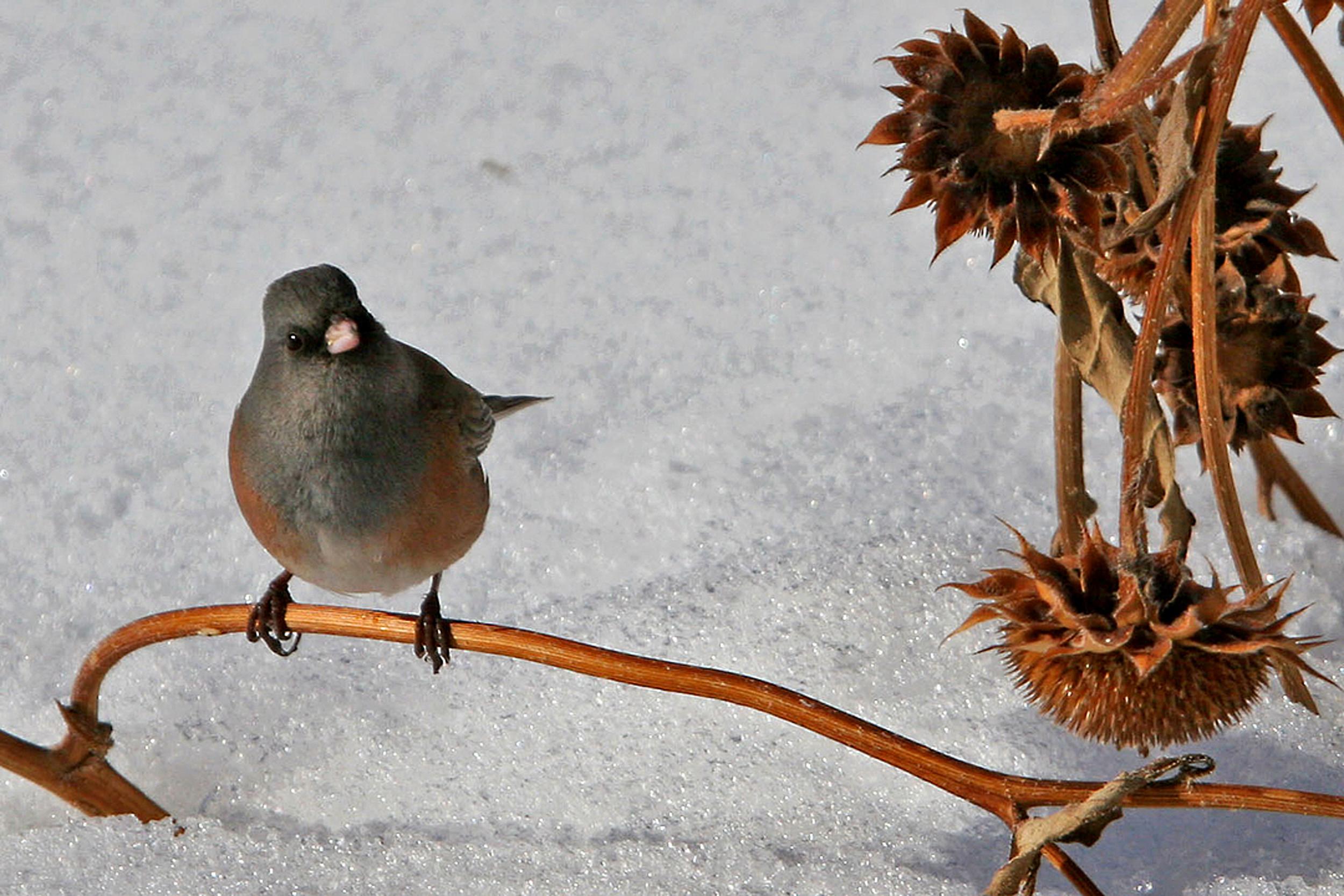 76 - Bird