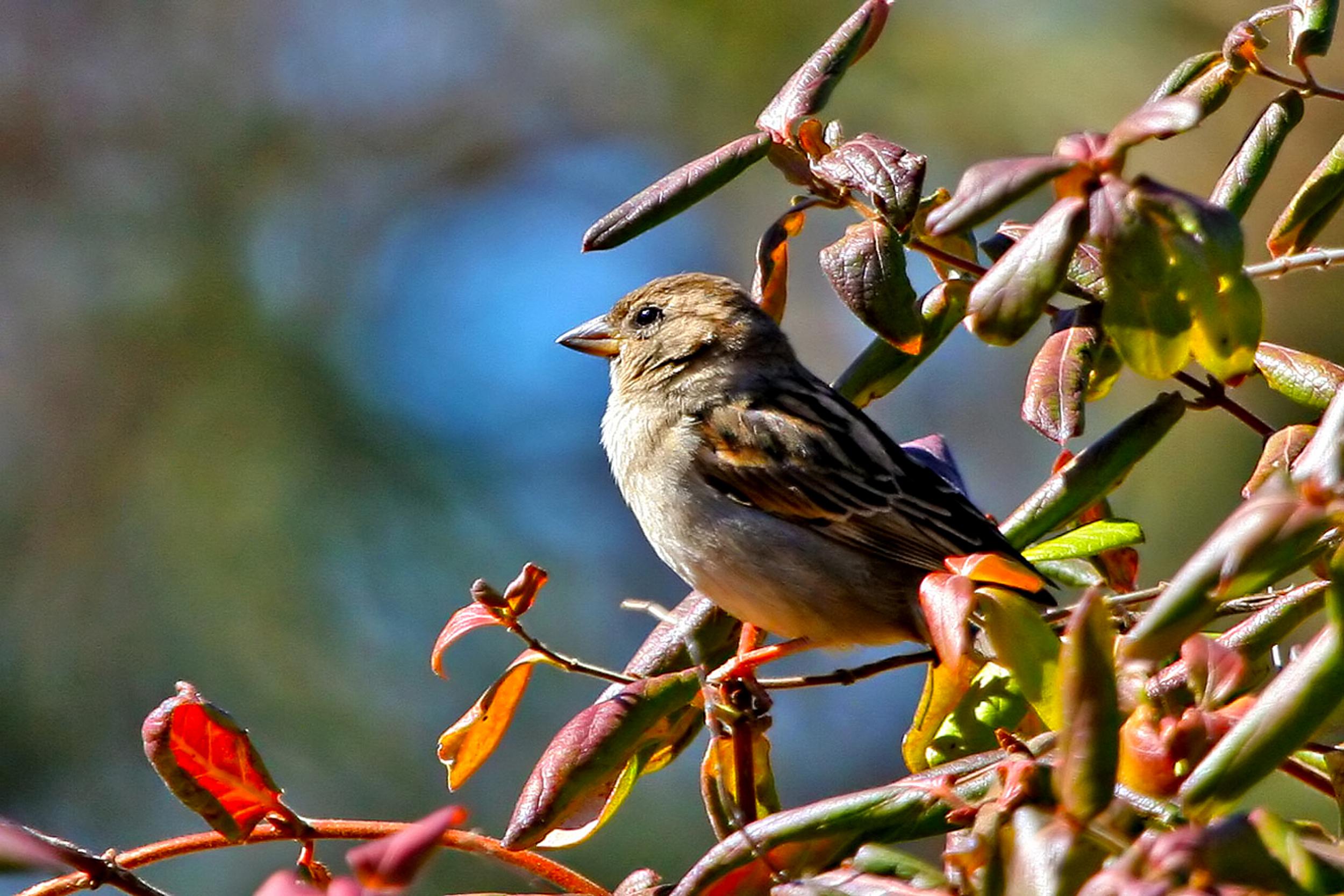 77 - Bird