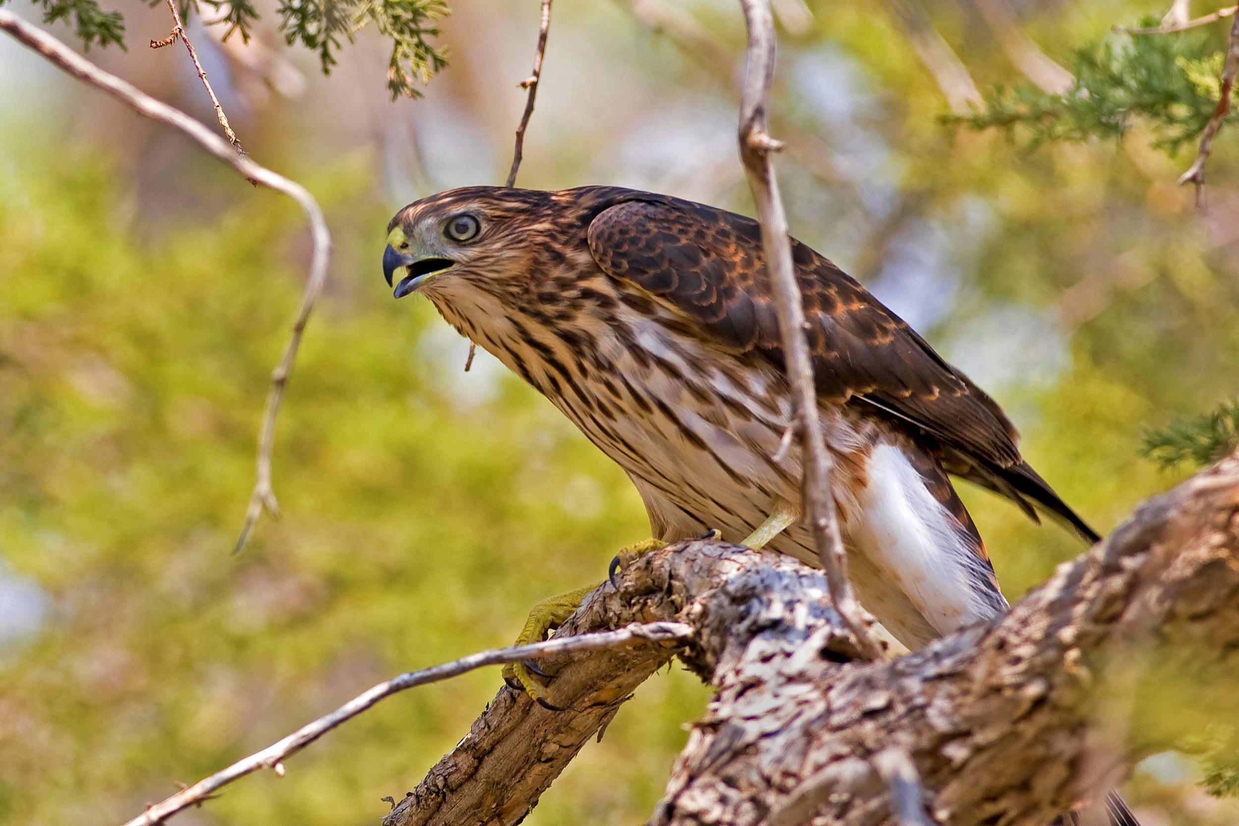 91 - Bird