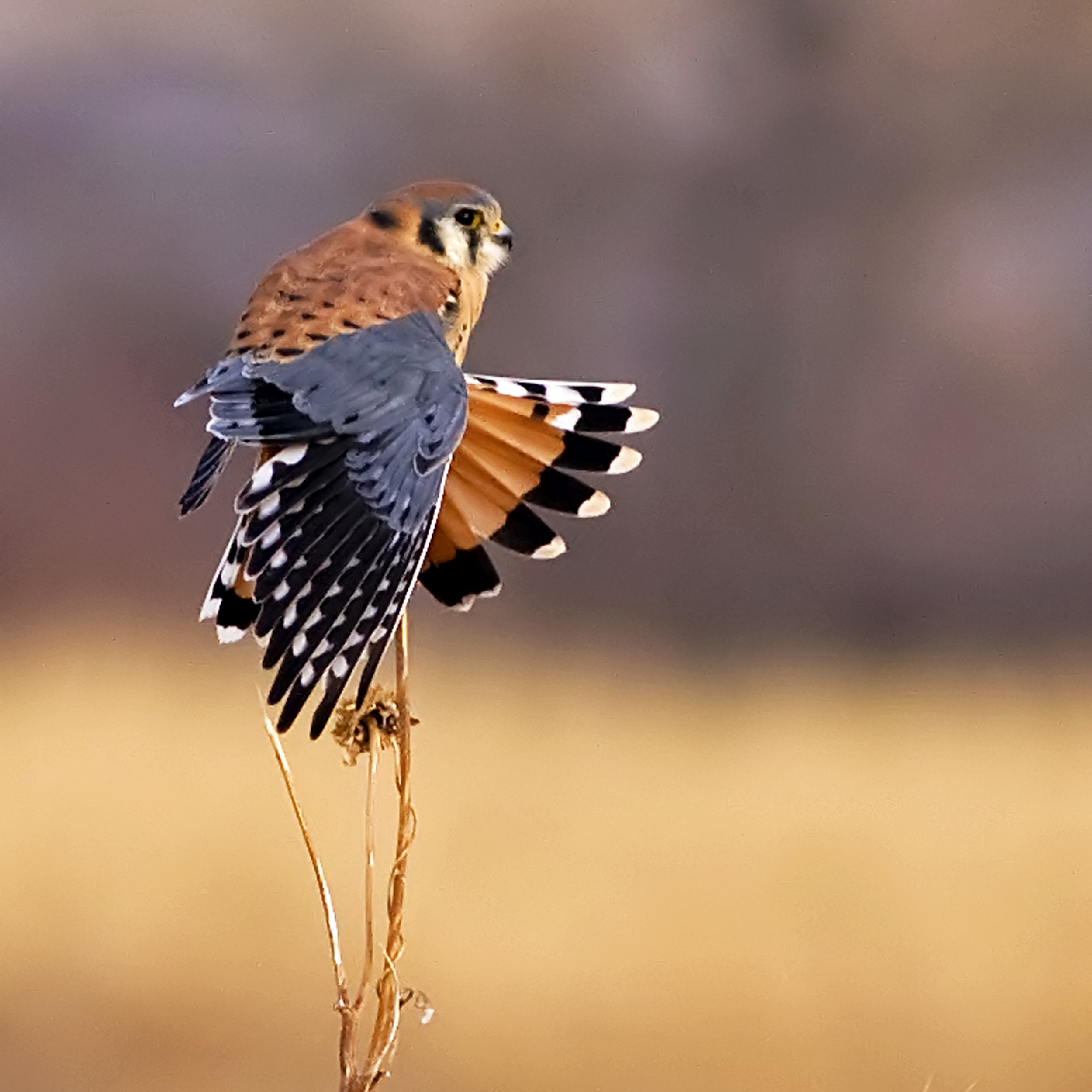 94 - Bird