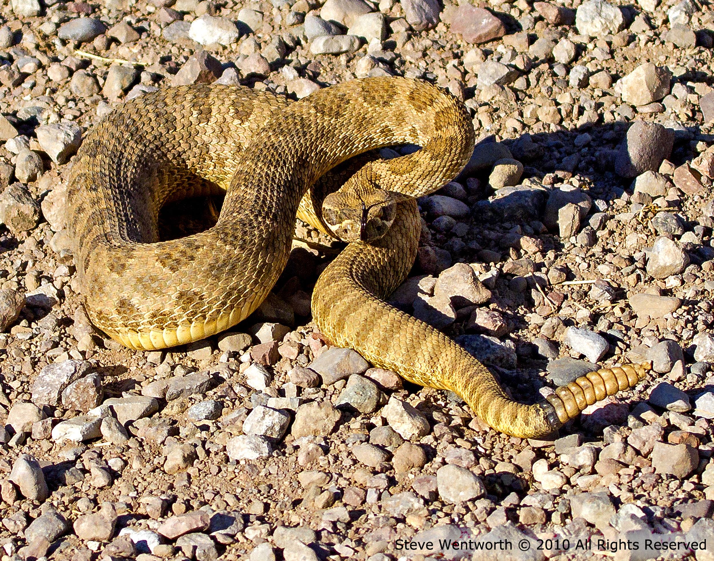 100 - Snake