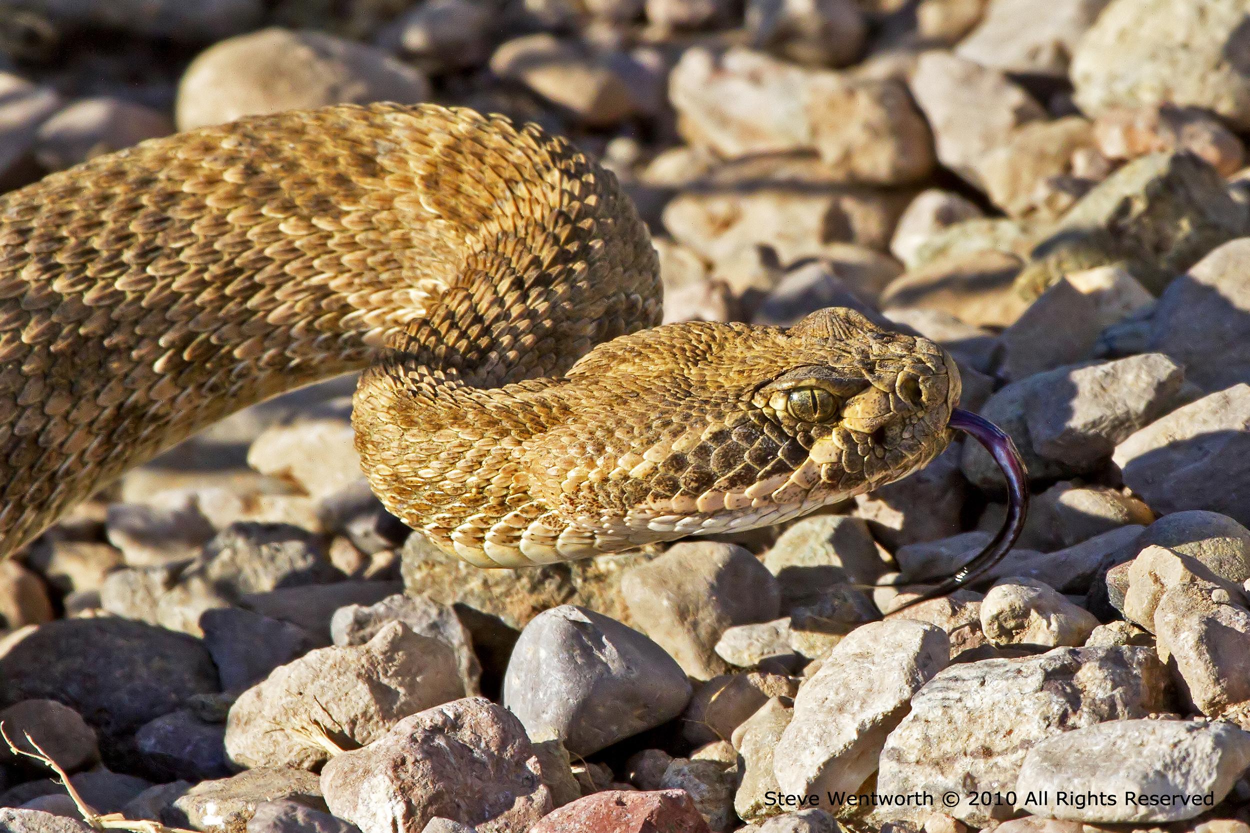 101 - Snake