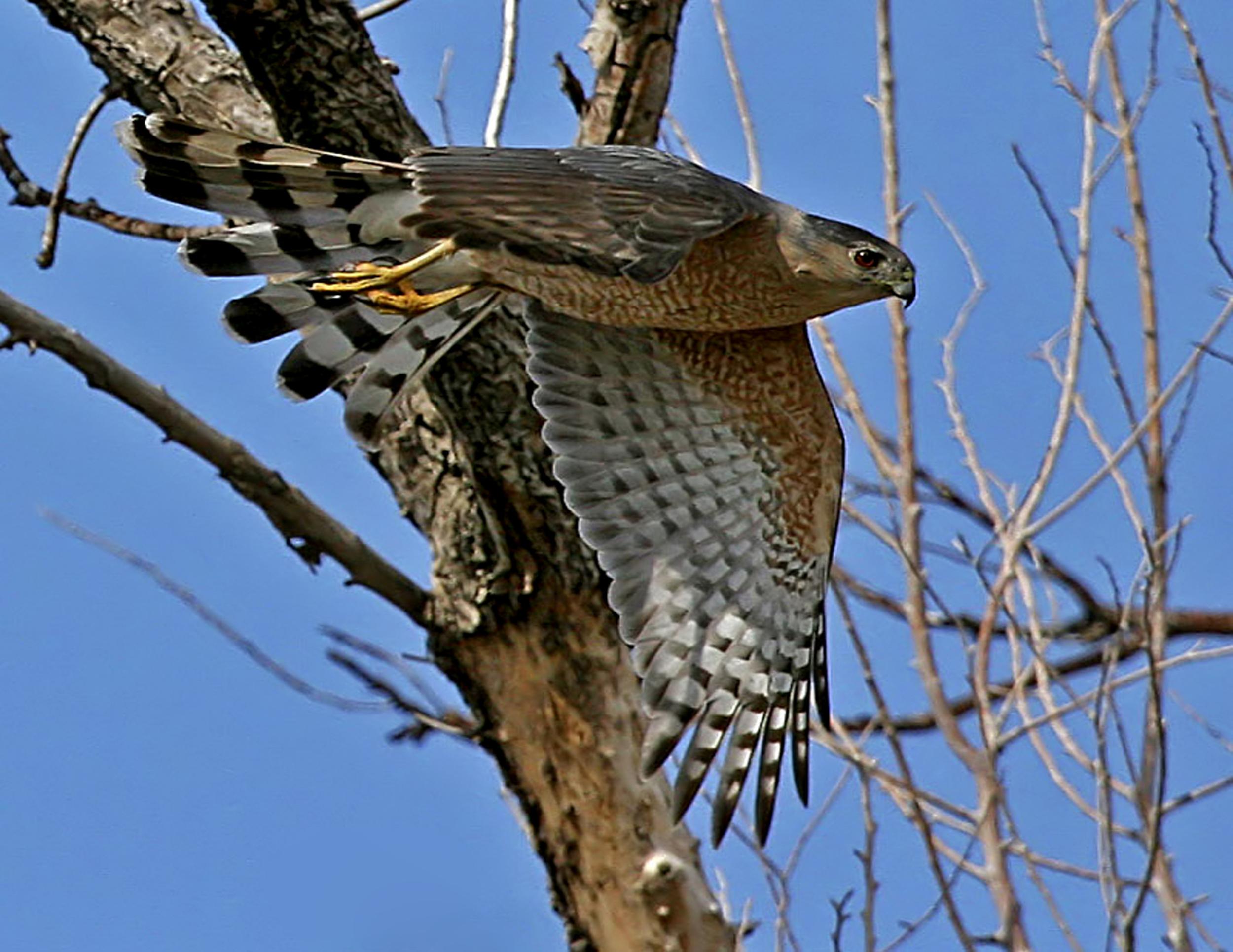 114 - Bird