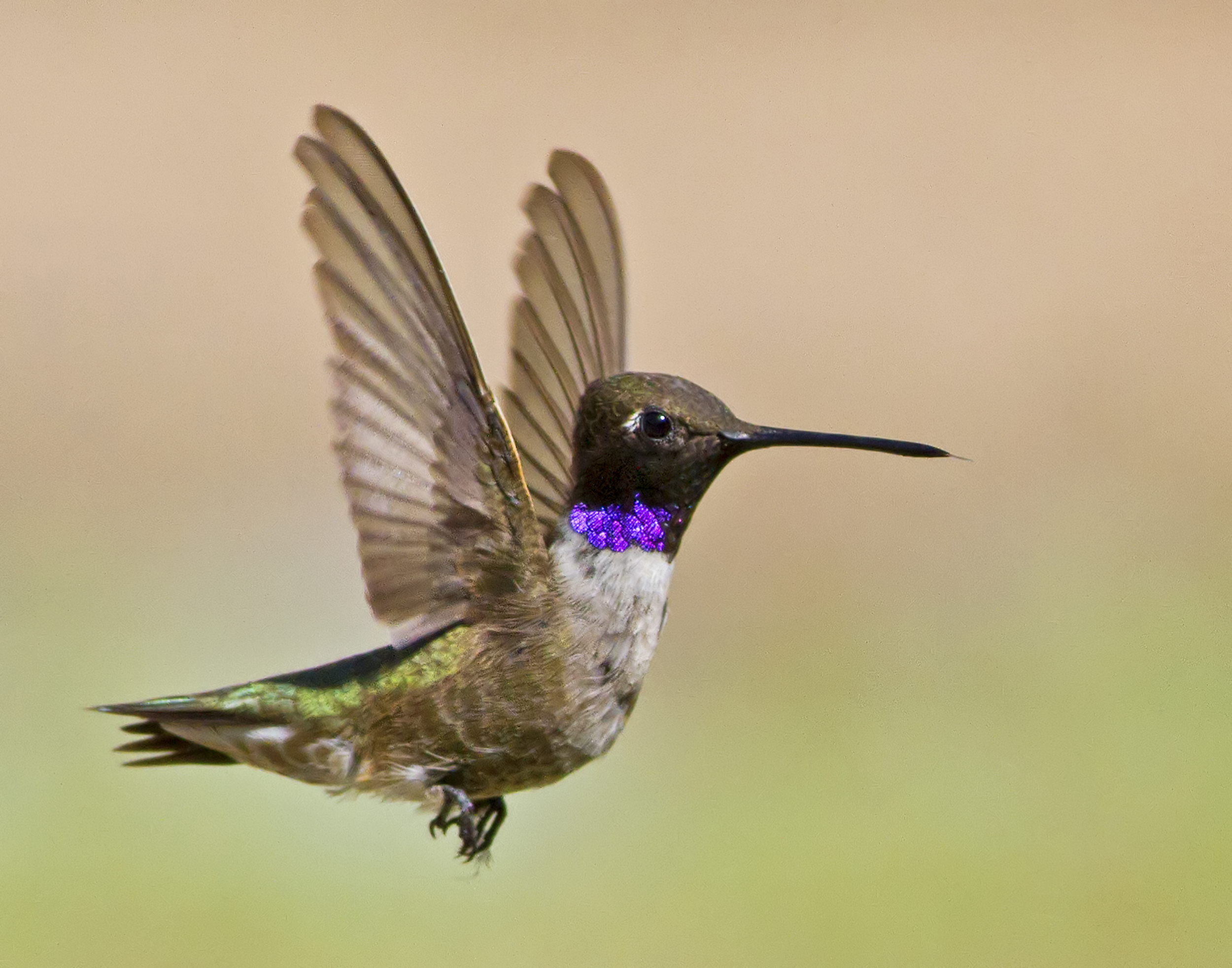 121 - Hummingbird