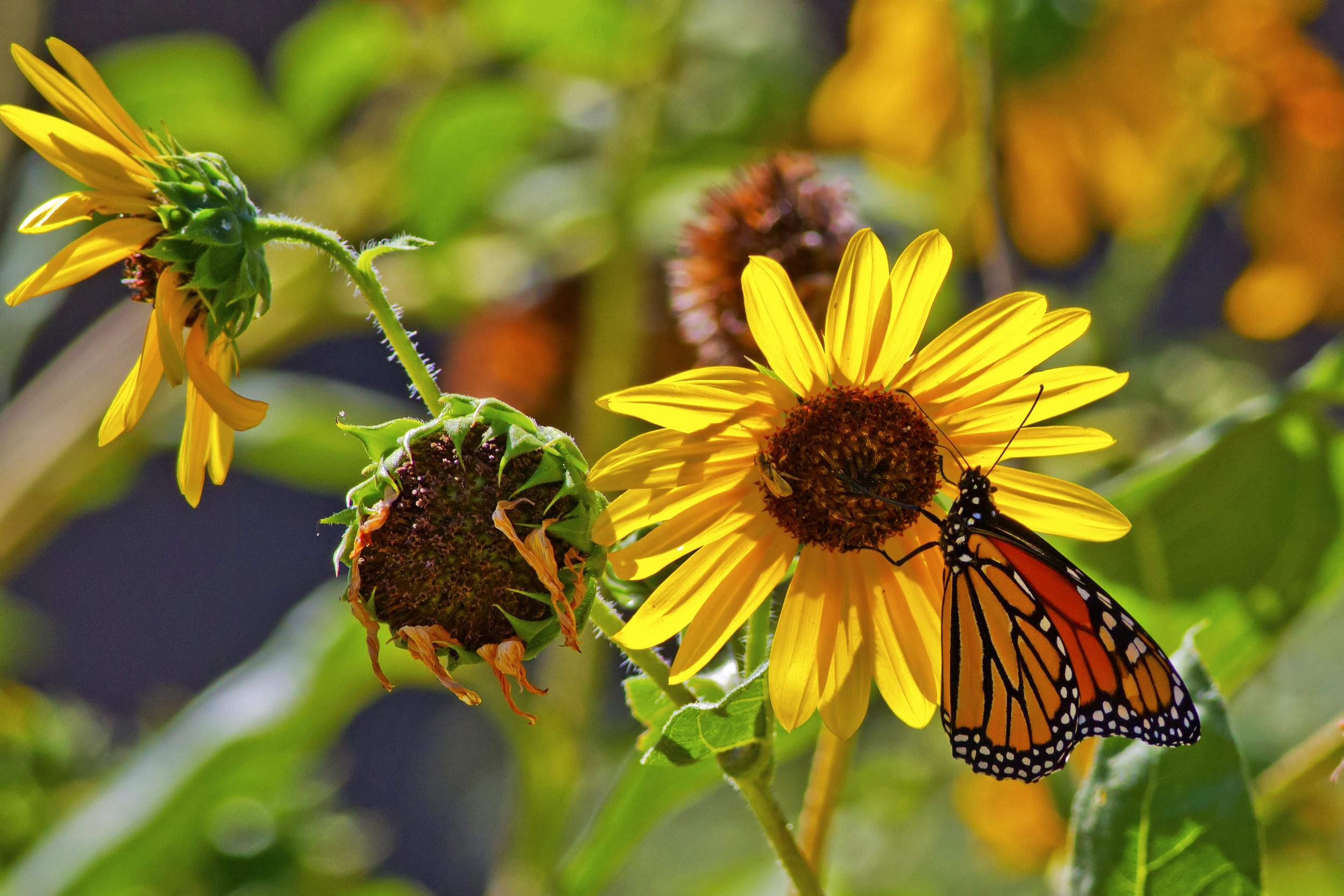 137 - Butterfly