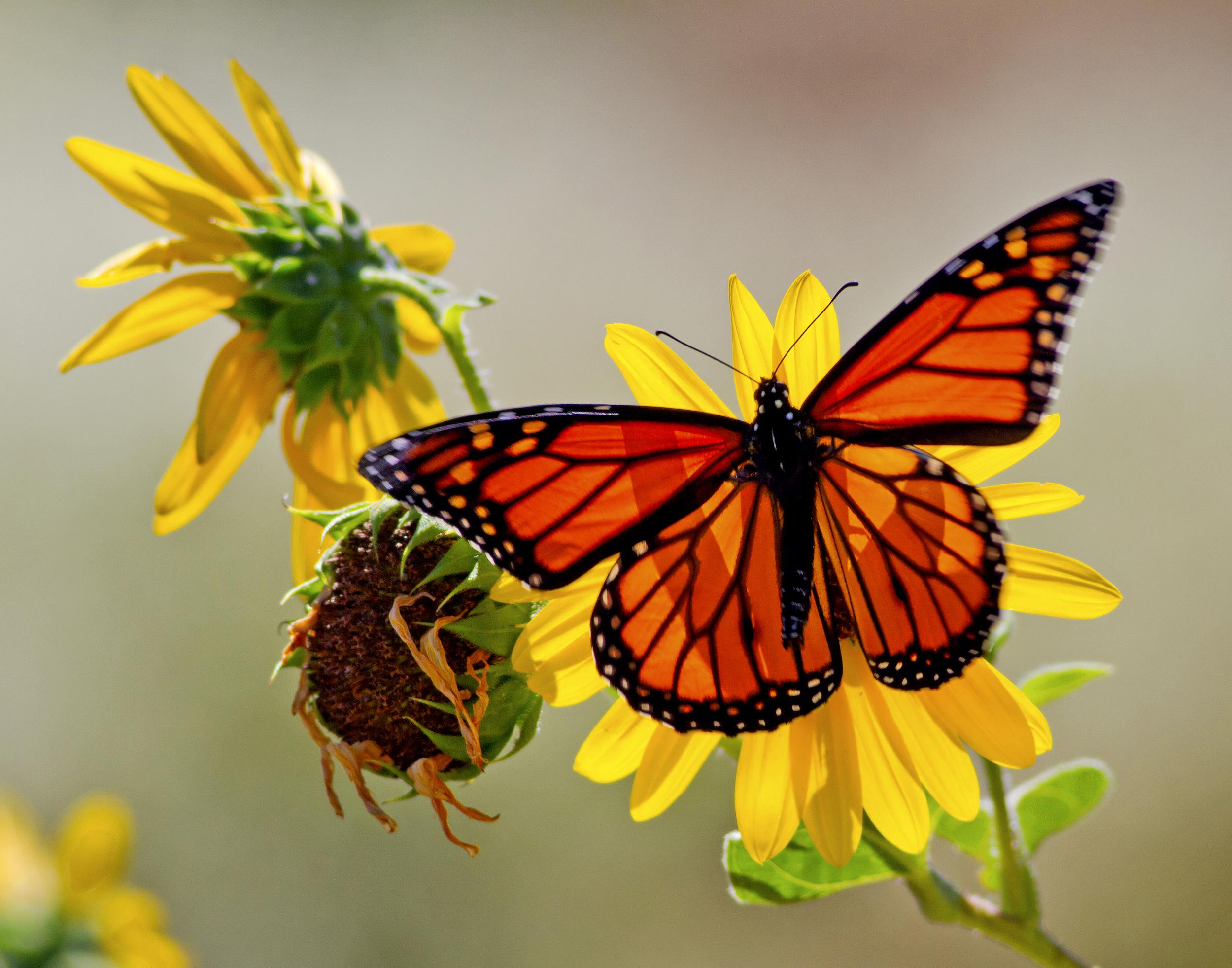 138 - Butterfly
