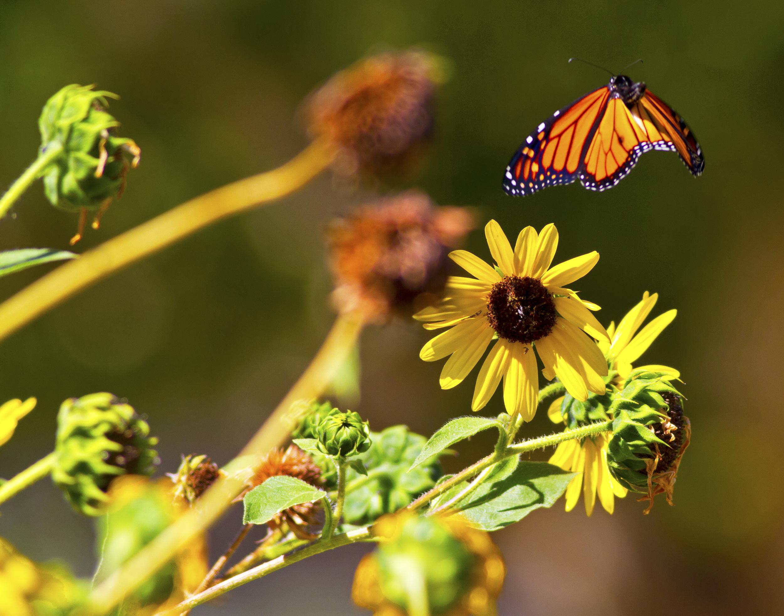142 - Butterfly