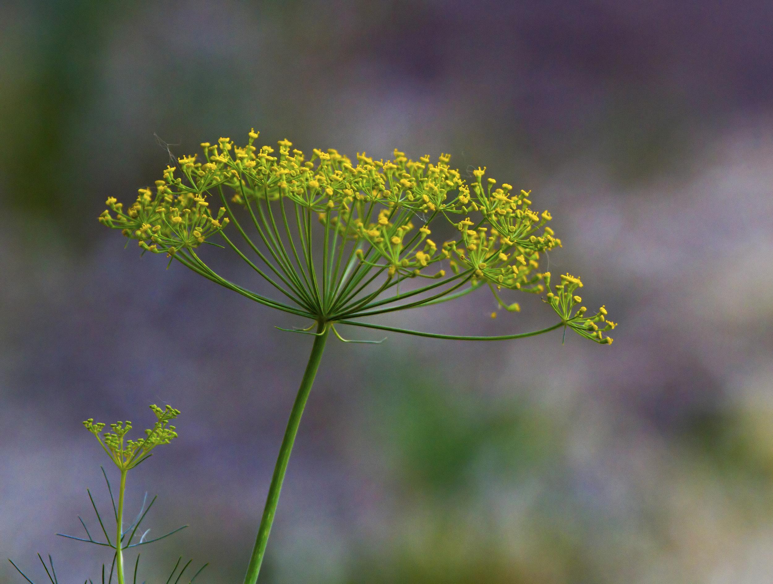 146 - Flower