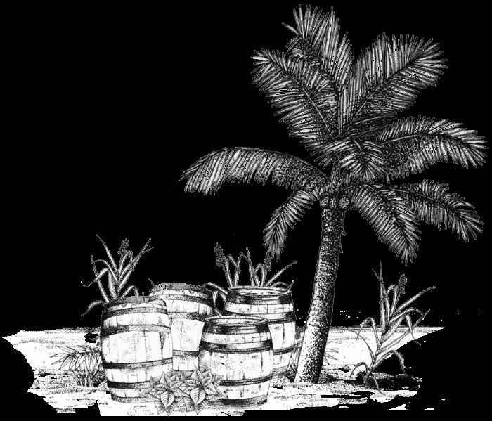 vieillissement-tropical.jpg