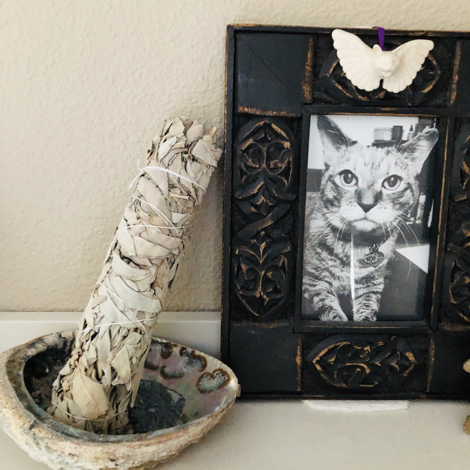 bundle of white sage…next to a photo of Cumin, our cat who's now on angel duty