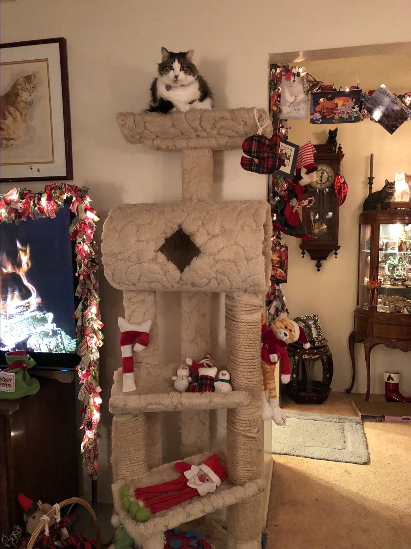 the cat surveys the Christmas wonderland