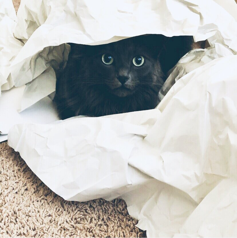 Bear our cat, overwhelmed by white papers!