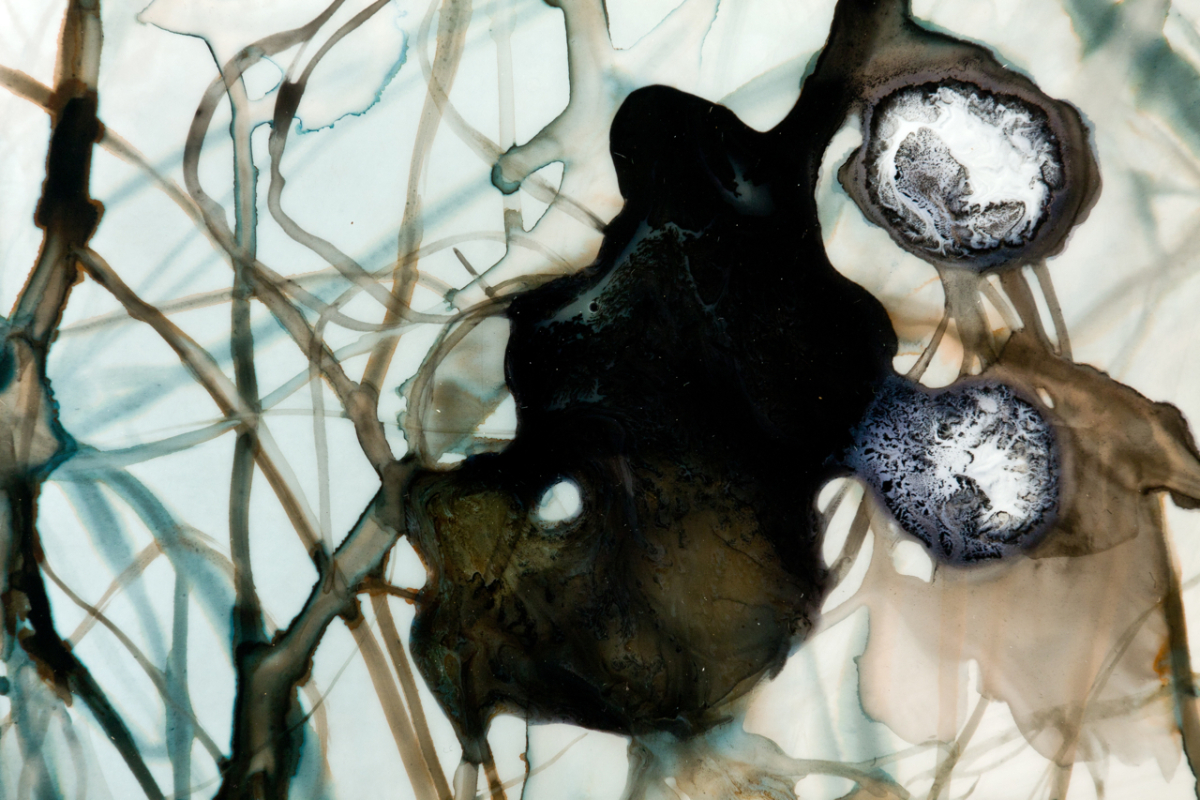 Skimmer #2, detail 2011 ink and acrylic on mylar 25 by 20 inches