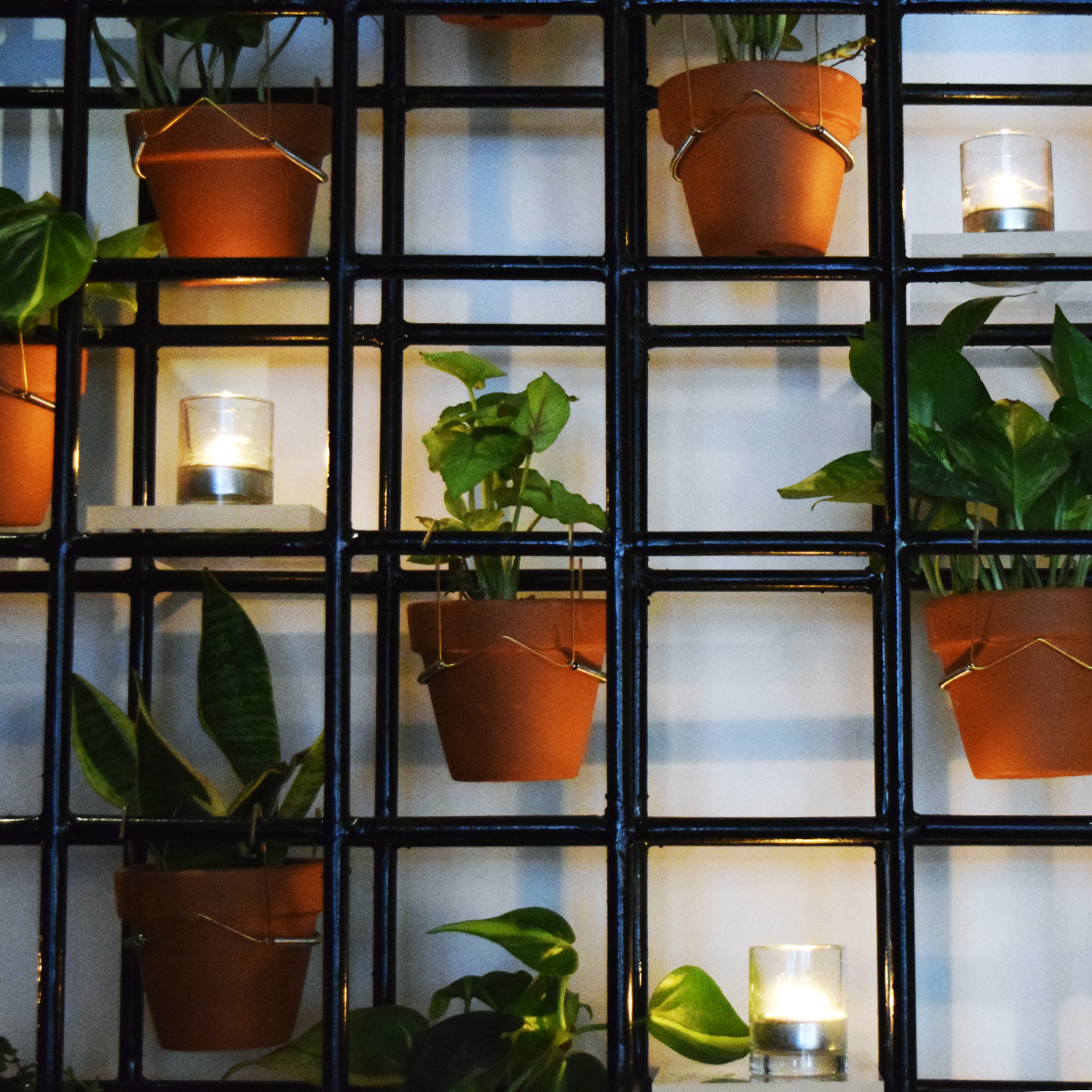 A unique wallscape adds light, and greenery, and helps bring you to a place of Chef Franco Barrio's creating.