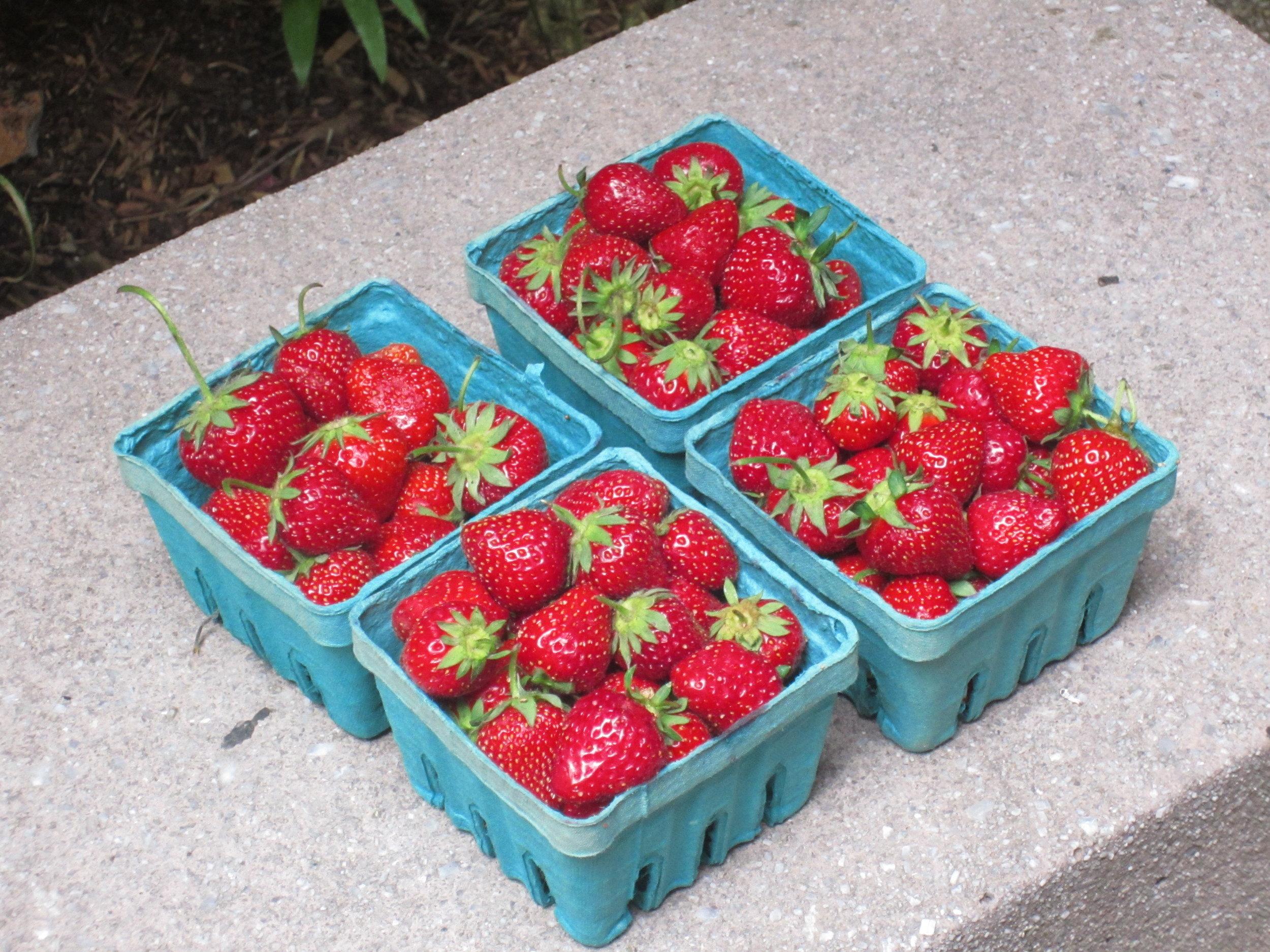 LL Cool S: Ladybugs Love Cool Strawberries ;)