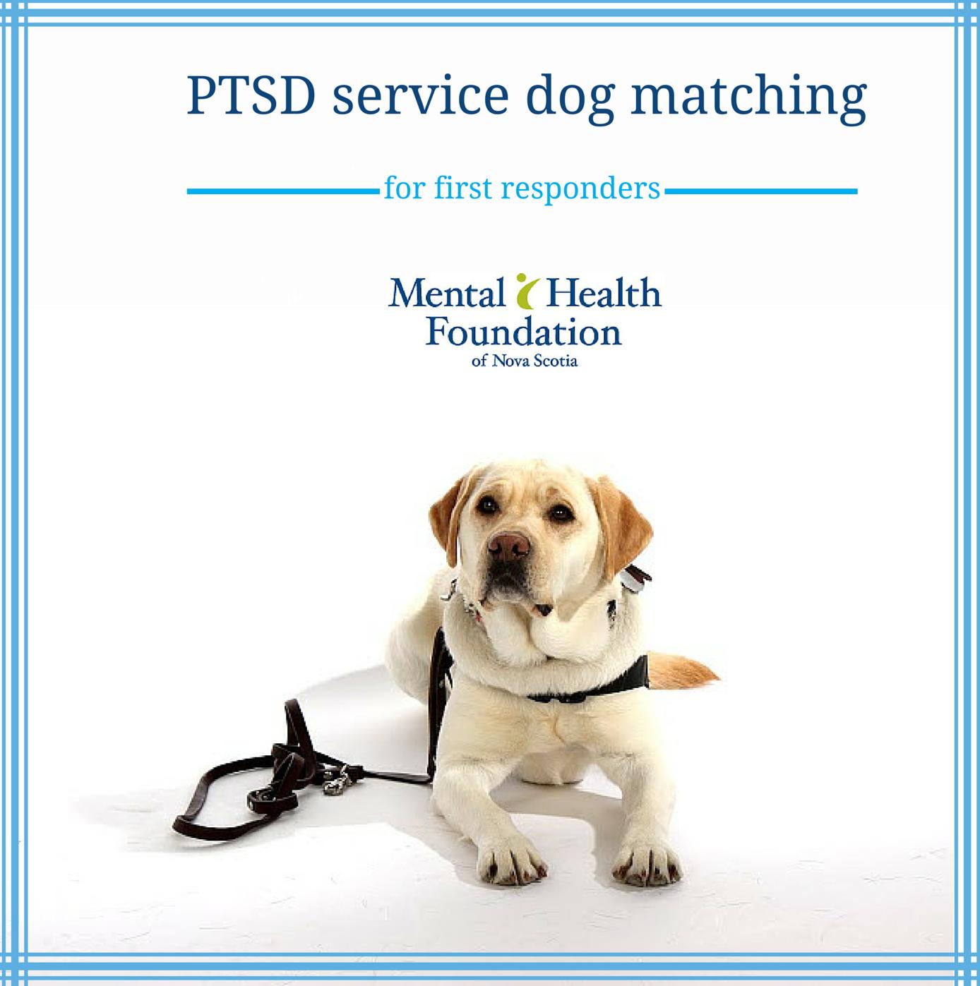 Ptsd Service Dog Matching Mental Health Foundation Of Nova Scotia