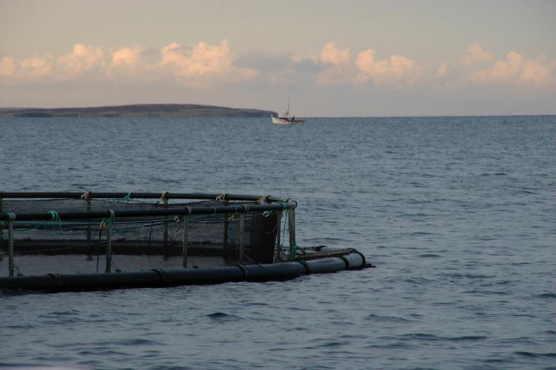 A salmon net off Deerness, Orkney Islands