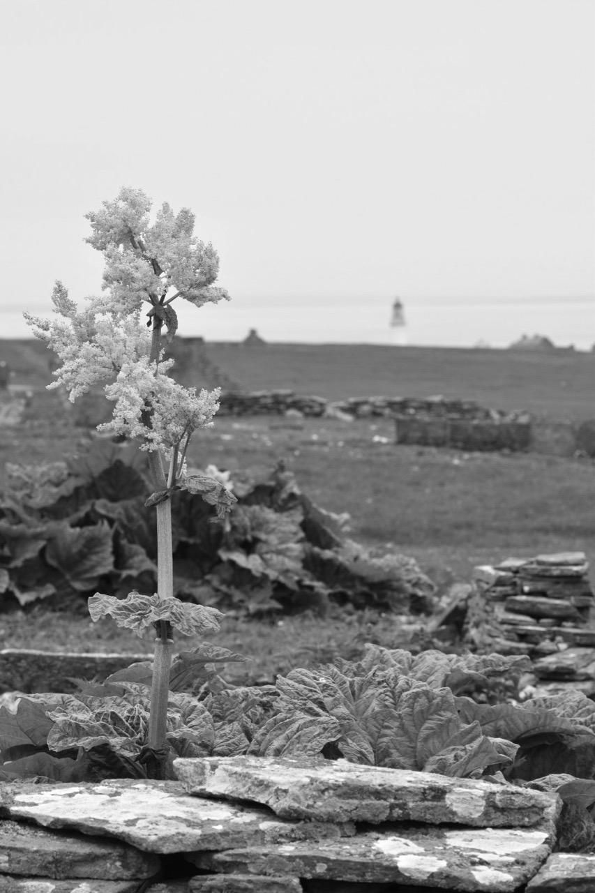 Stroma R1.jpg