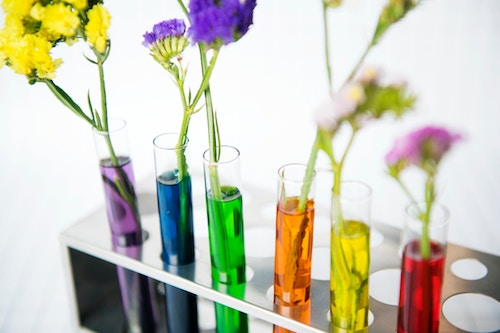 flowers in test tubes.jpg