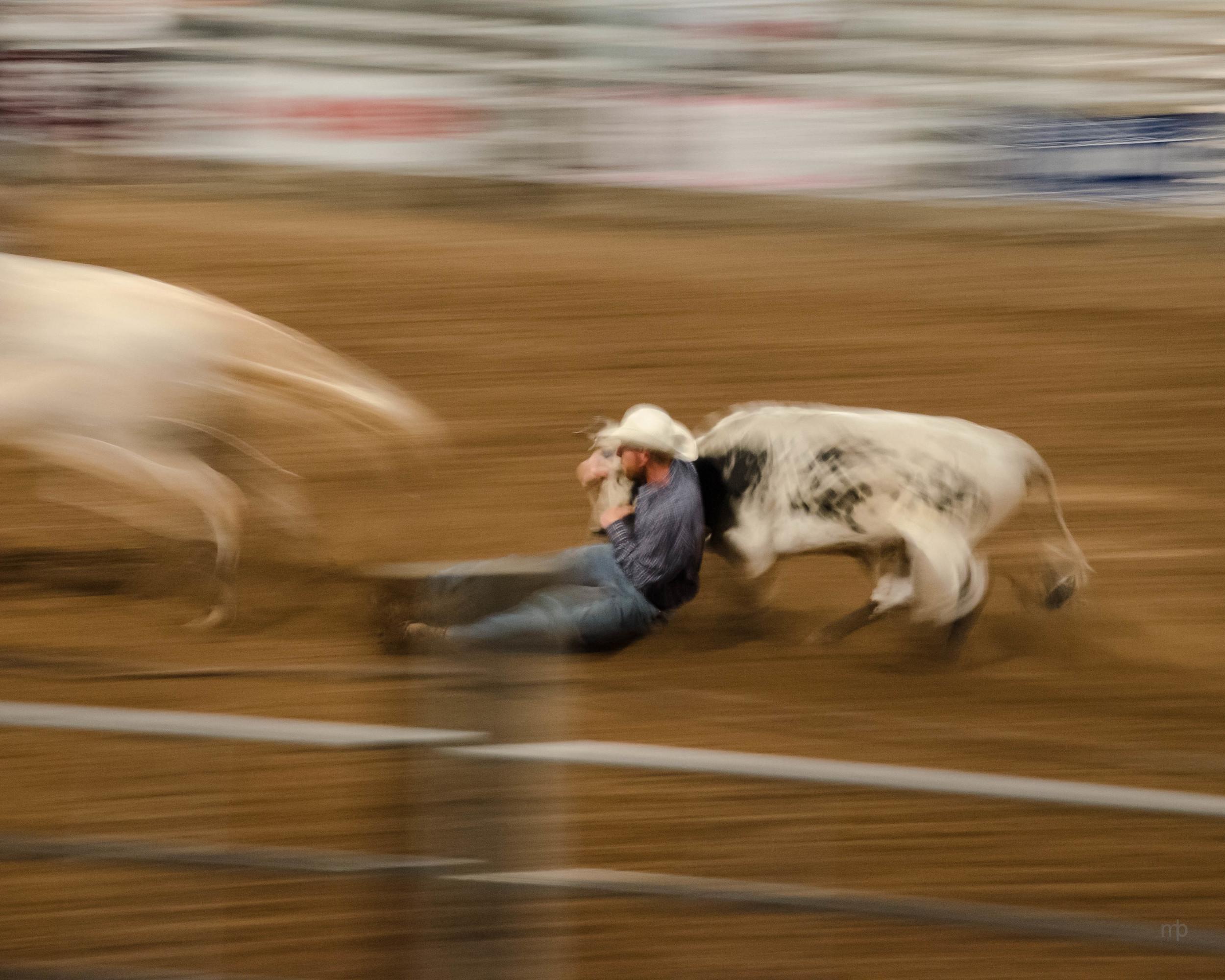 Steer Wrestler. Longford Rodeo 2014. Nikon D7000, Tamron 18-270 mm, ISO 3200, 100 mm, f/8.0, 1/8 sec.