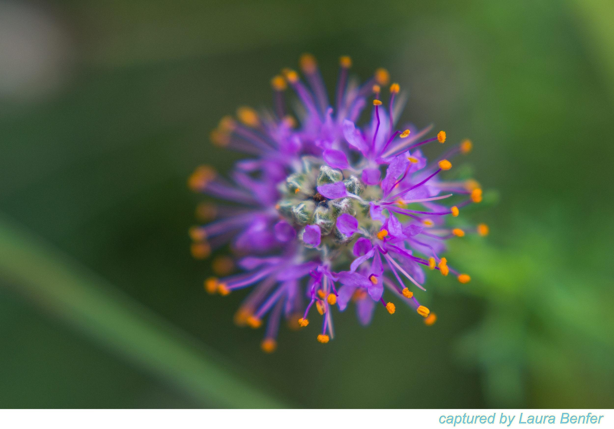 Flower-4.jpg