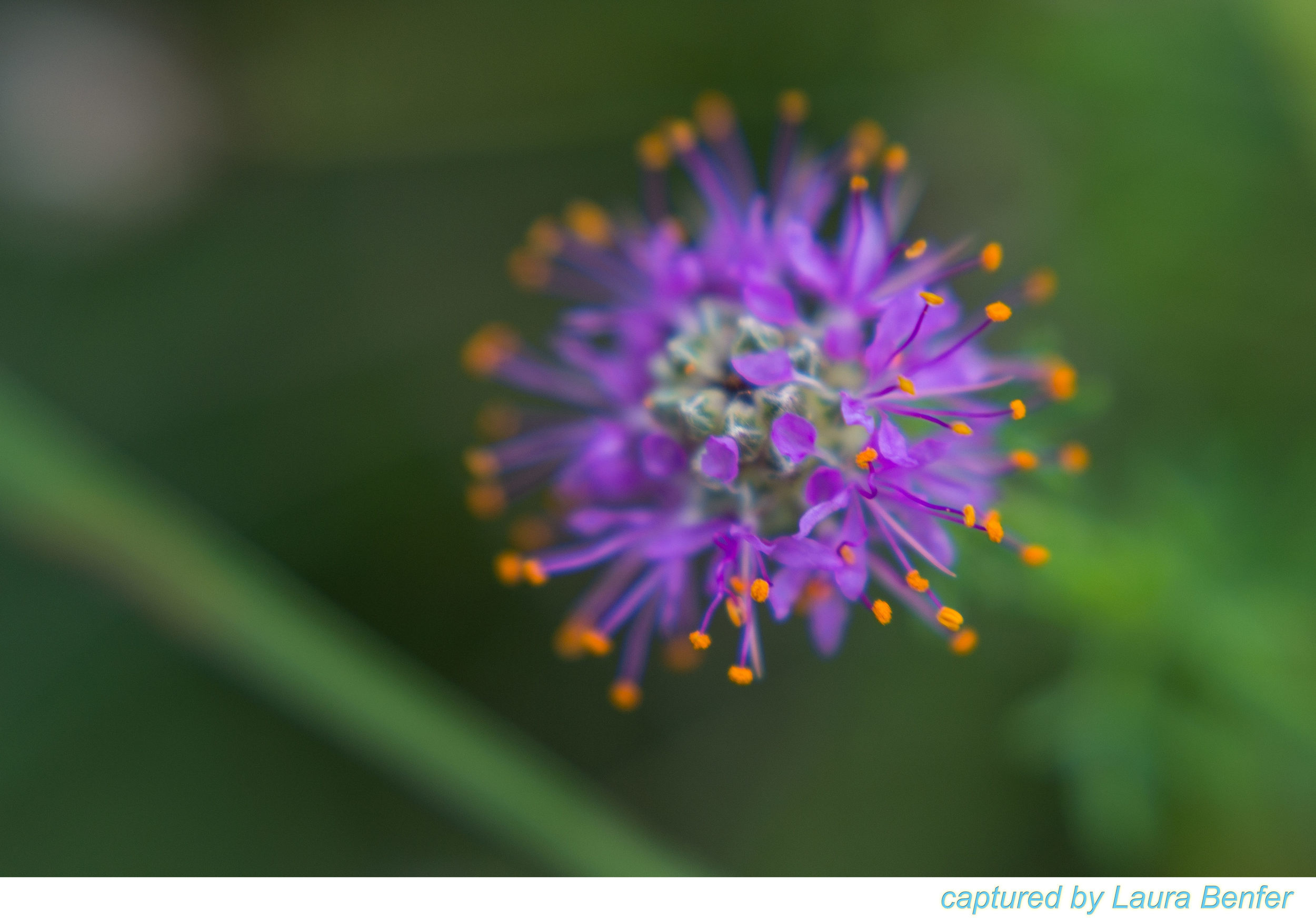 Flower-5.jpg