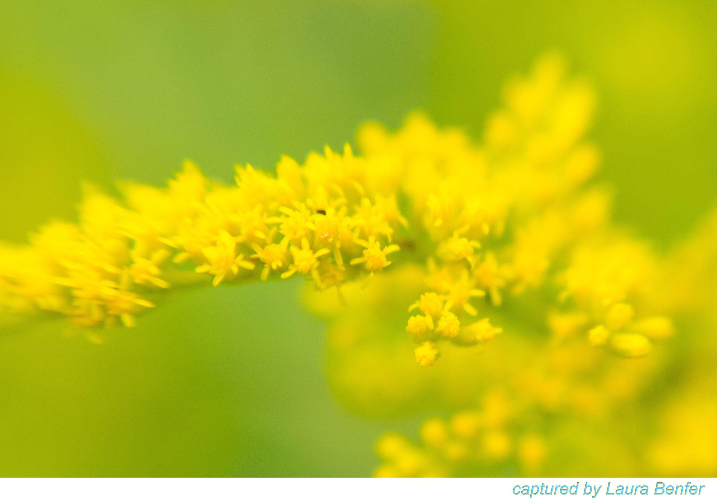 Flower-16.jpg