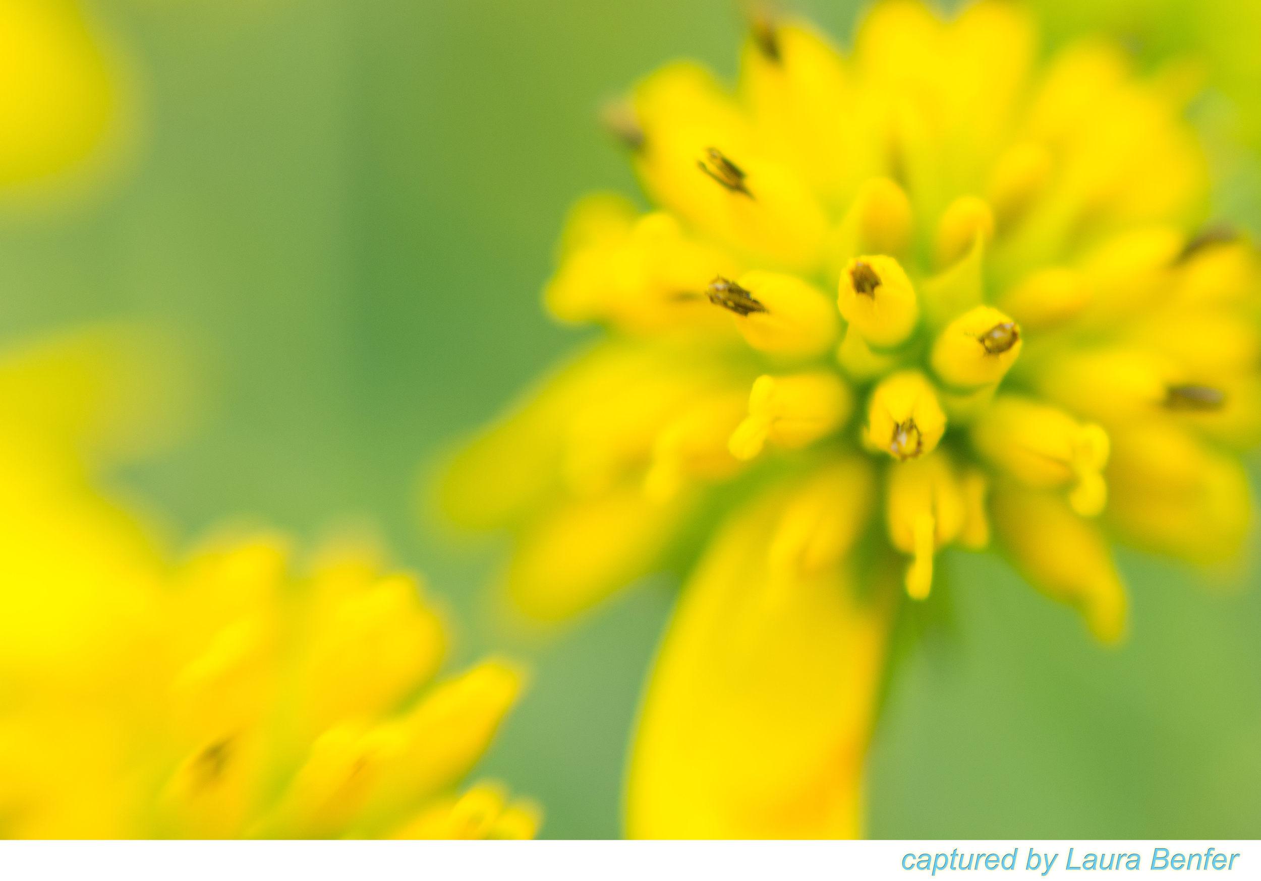 Flower-19.jpg