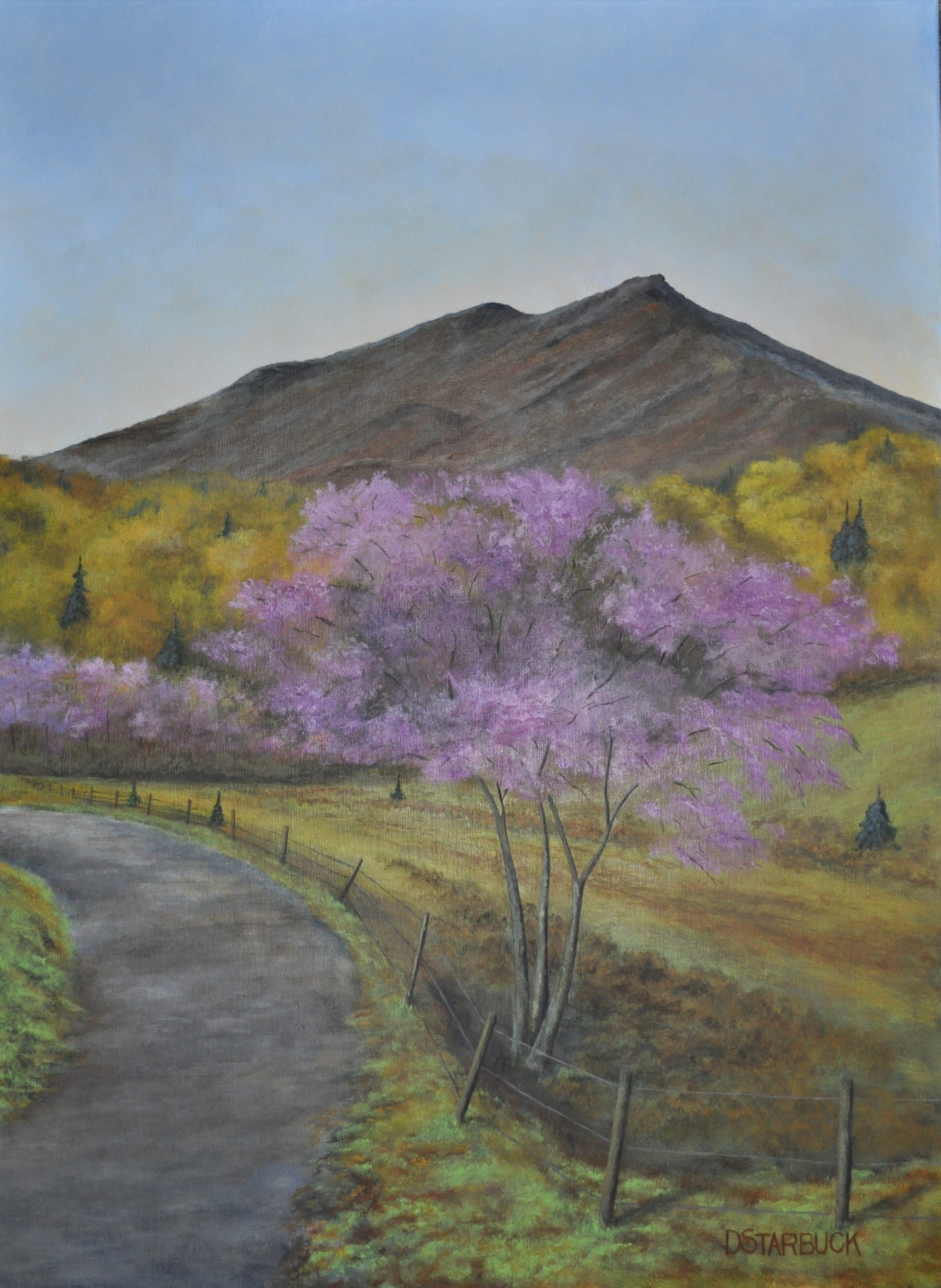 """""""Redbud Bloom at Grandfather"""" off Moses Cone Fire Tower Trail, North Carolina  Original: Acrylic on Linen, 18"""" x 24"""""""