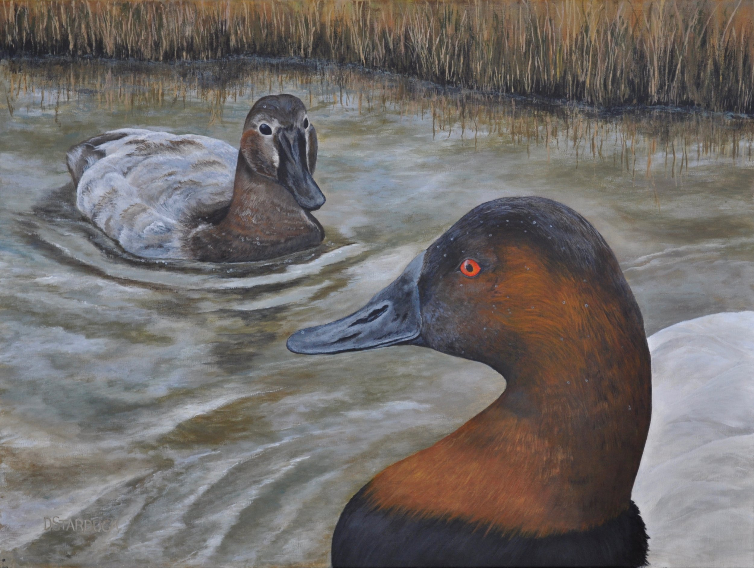 """Introducing Mr. & Mrs. Canvasback""  Original: Acrylic on Linen, 24"" x 18"""