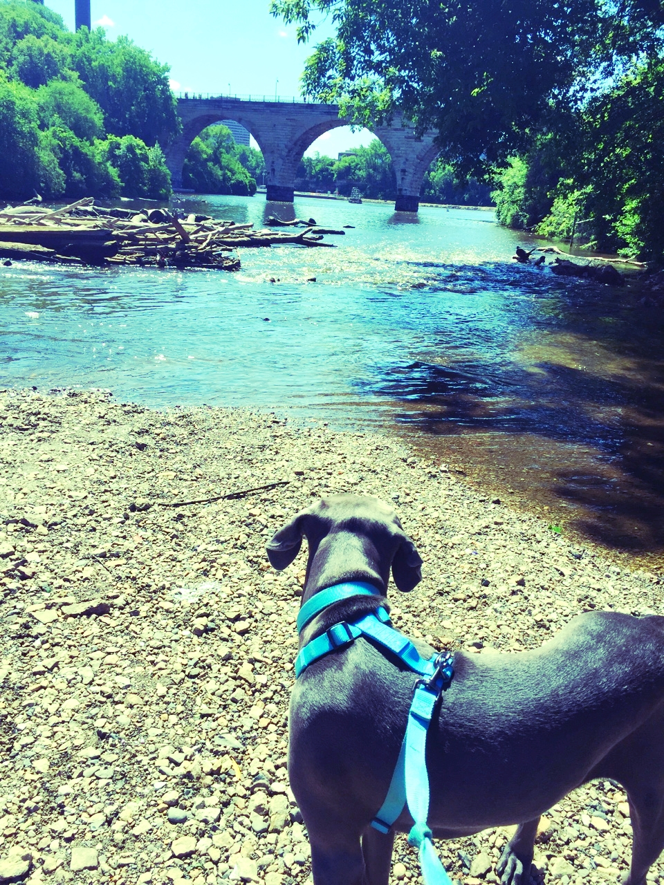 Stone Arch Bridge from the Lower Trail in Father Hennepin Park