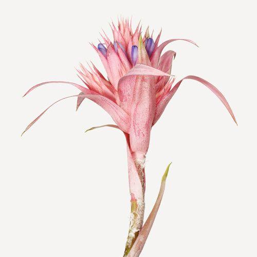 flower+1.jpg