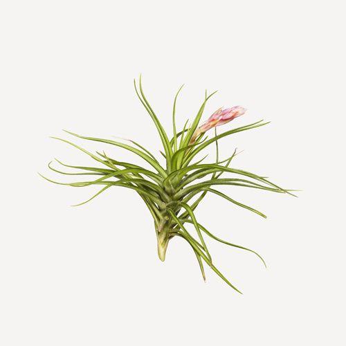 flower+2.jpg