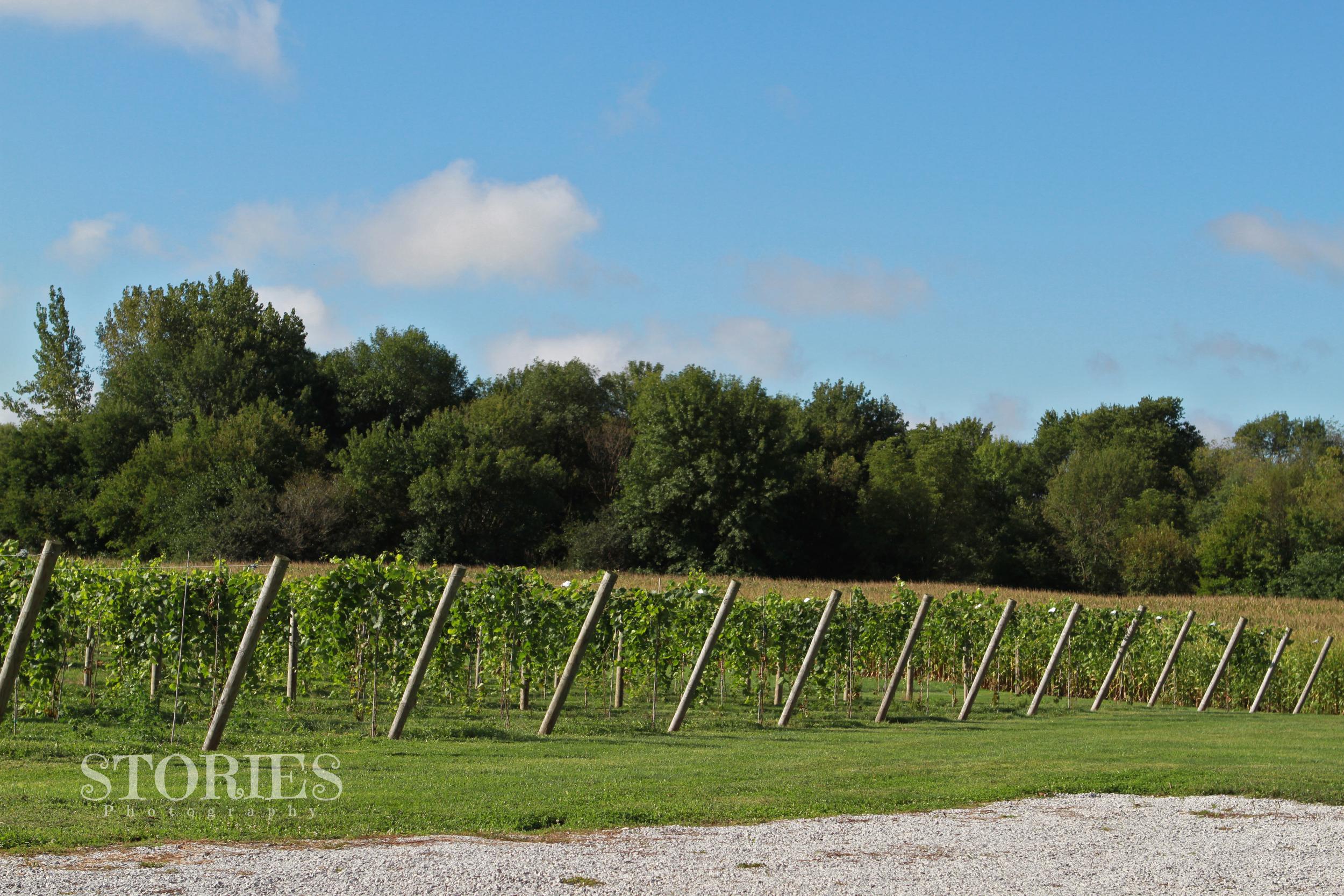 Remington Ride vineyard