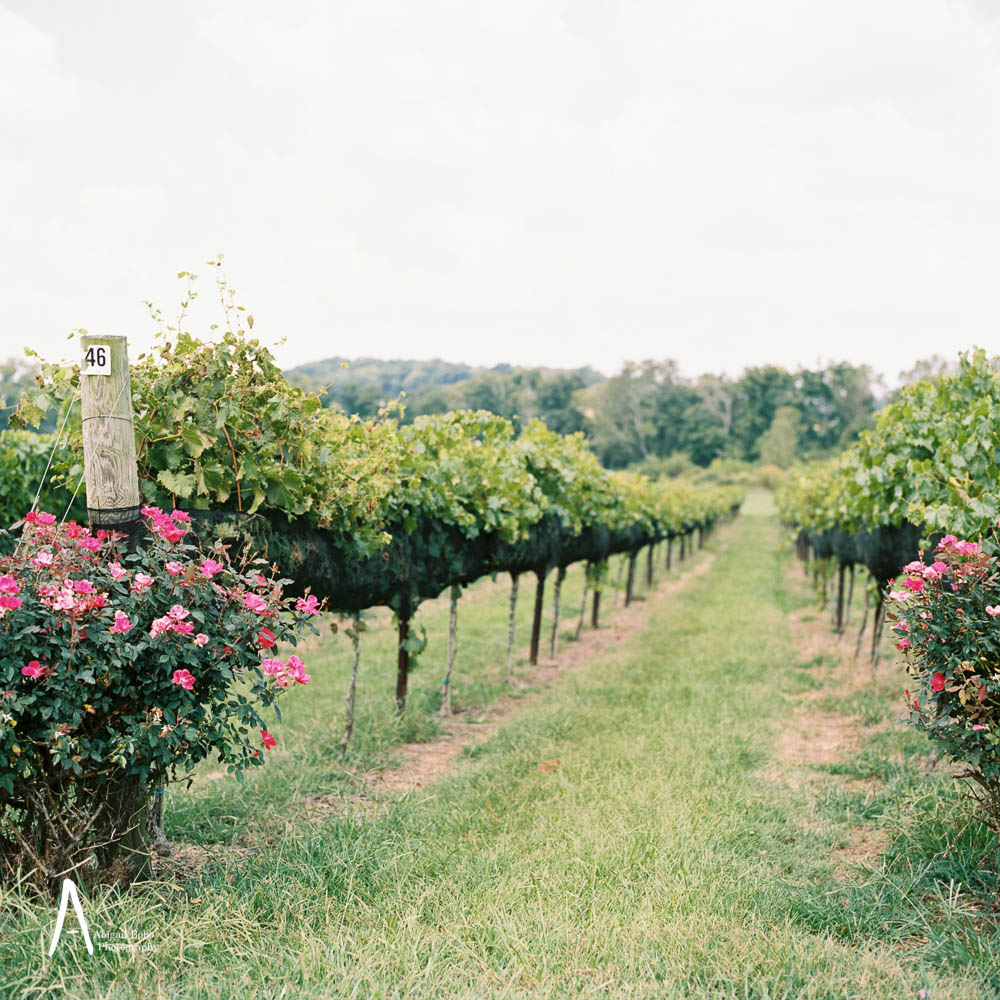lilac farms at arrington vineyards wedding photography ©2015abigailbobophotography-1.jpg