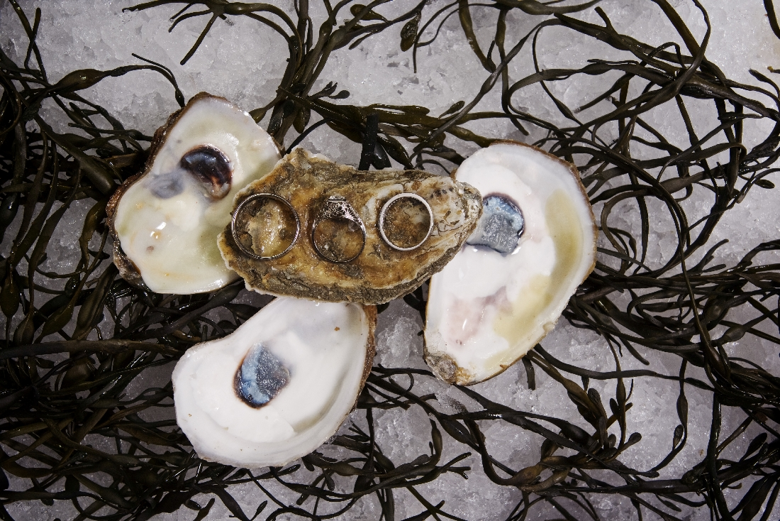 oyster shell with rings.jpeg