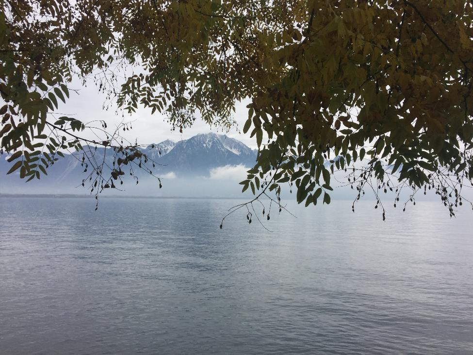 view_web.jpg