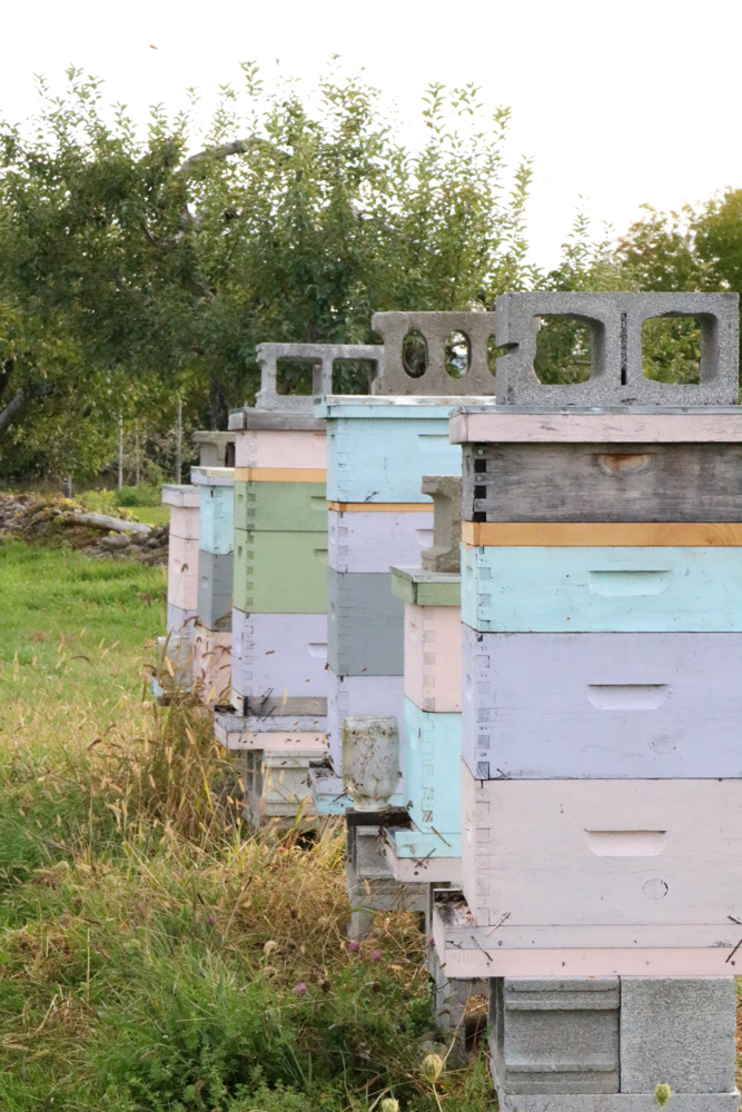 Bee farm with busy bees