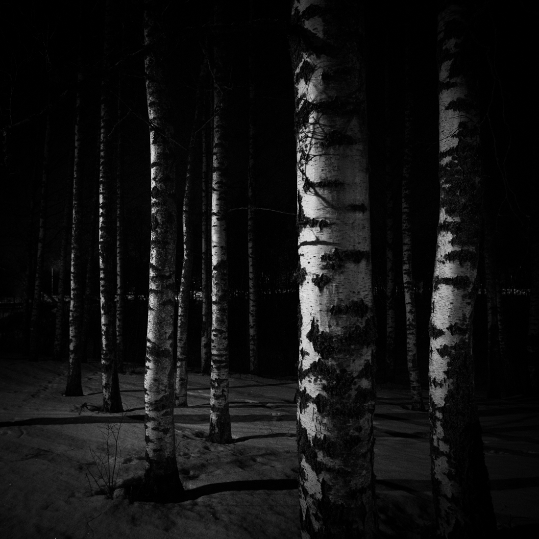 birch_night_TeemuOksanen.jpg