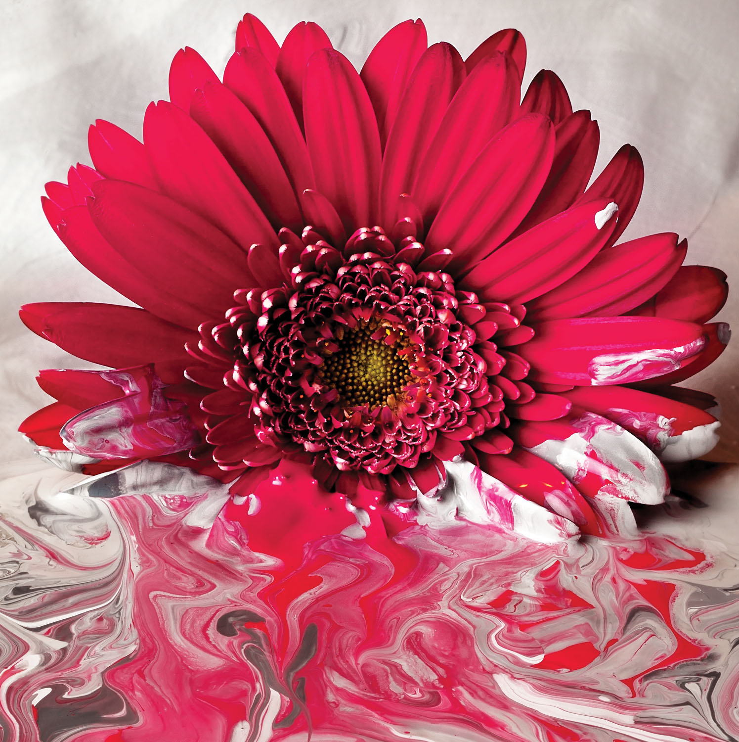 Dipped Flower Photograph