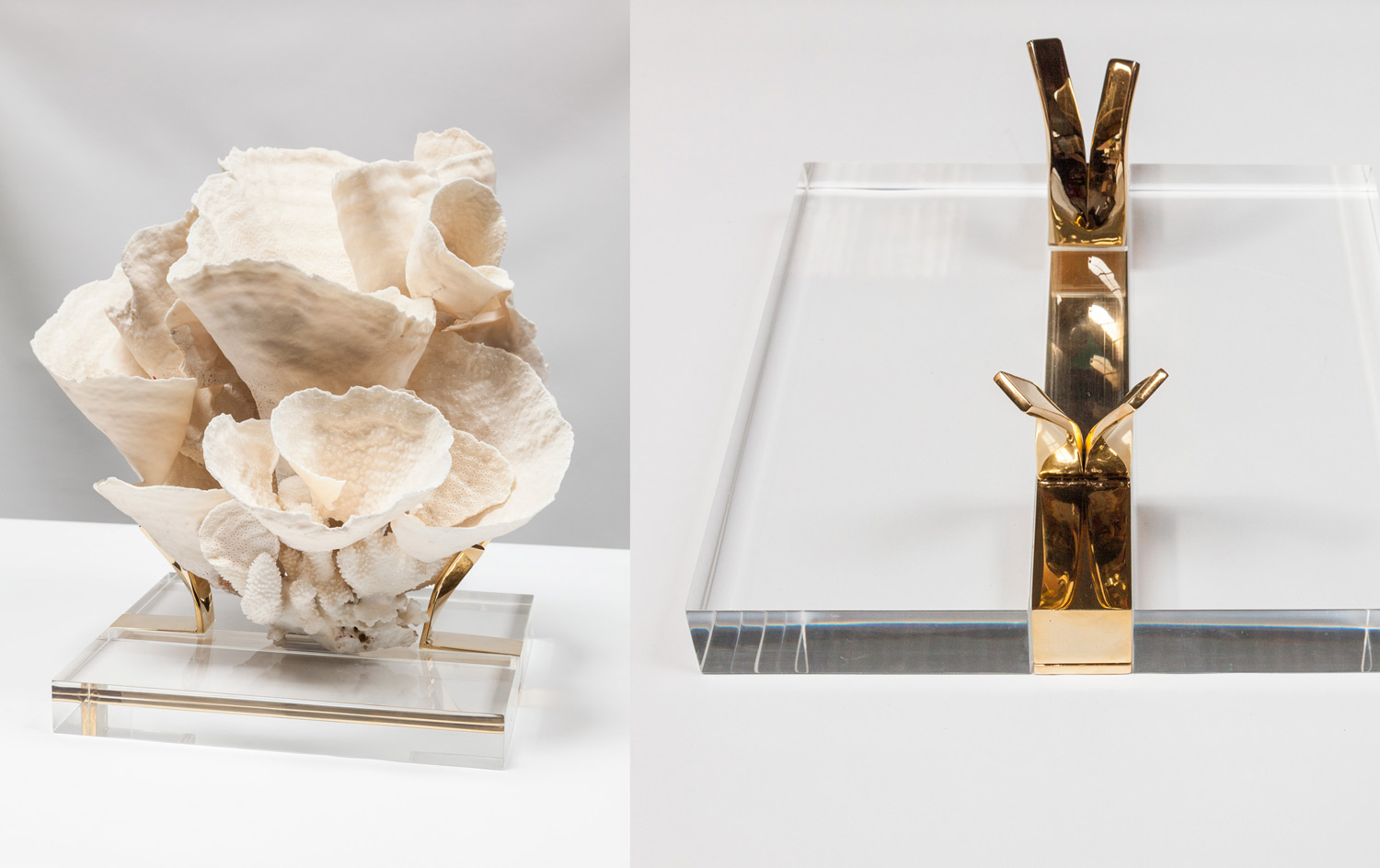 Coral with Custom Designed Gold Plated & Acrylic Stand