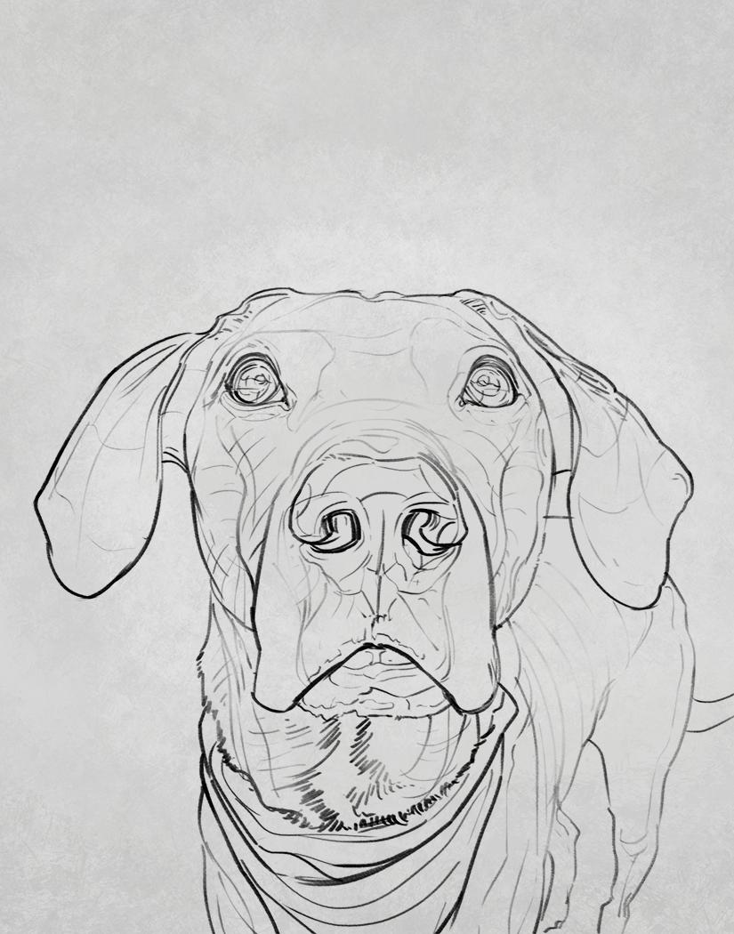 JoscelynSevier_Derb_Sketch_DogPortrait_Art.png