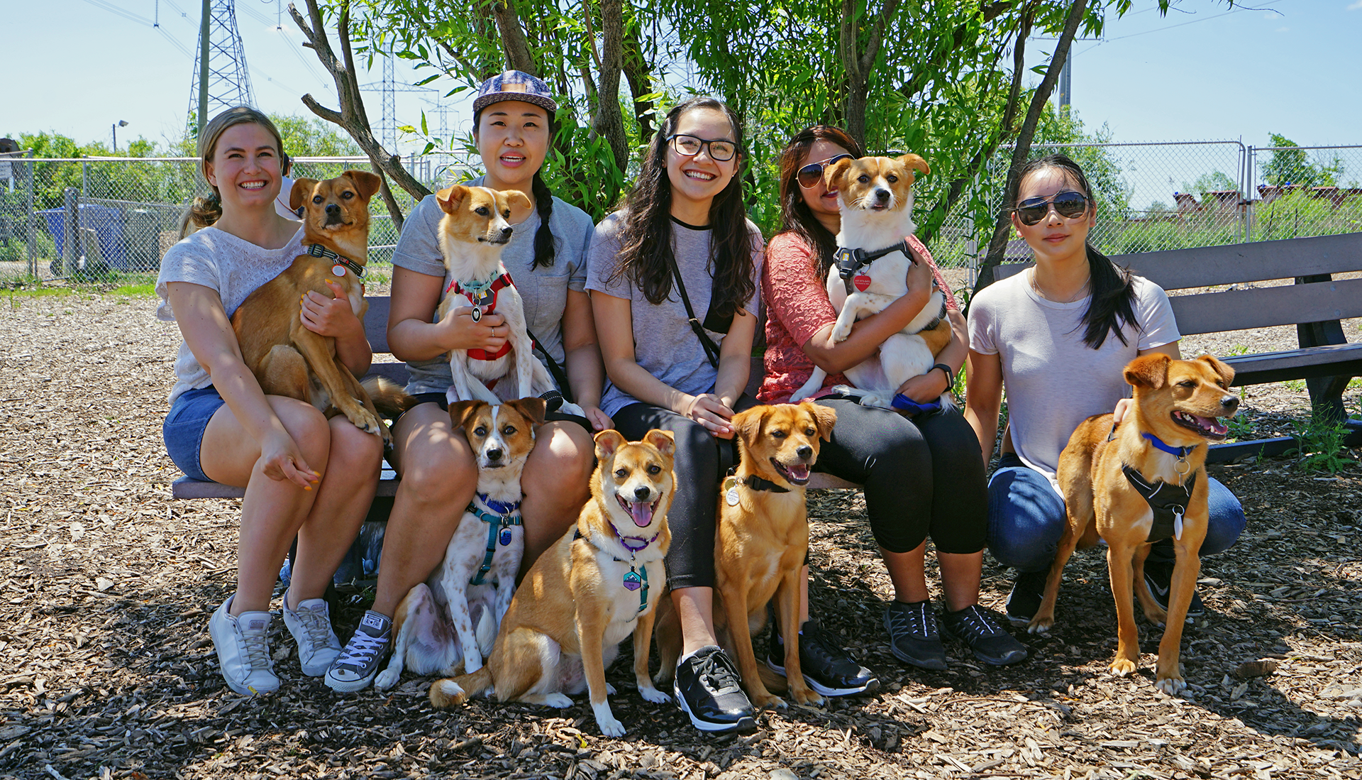 Family photo taken for the Dongs' 2nd birthday get together! Dogs from top left to bottom right: Ollie, Luna, Zorro, Aero, Elsie, Zappa, Charlie.