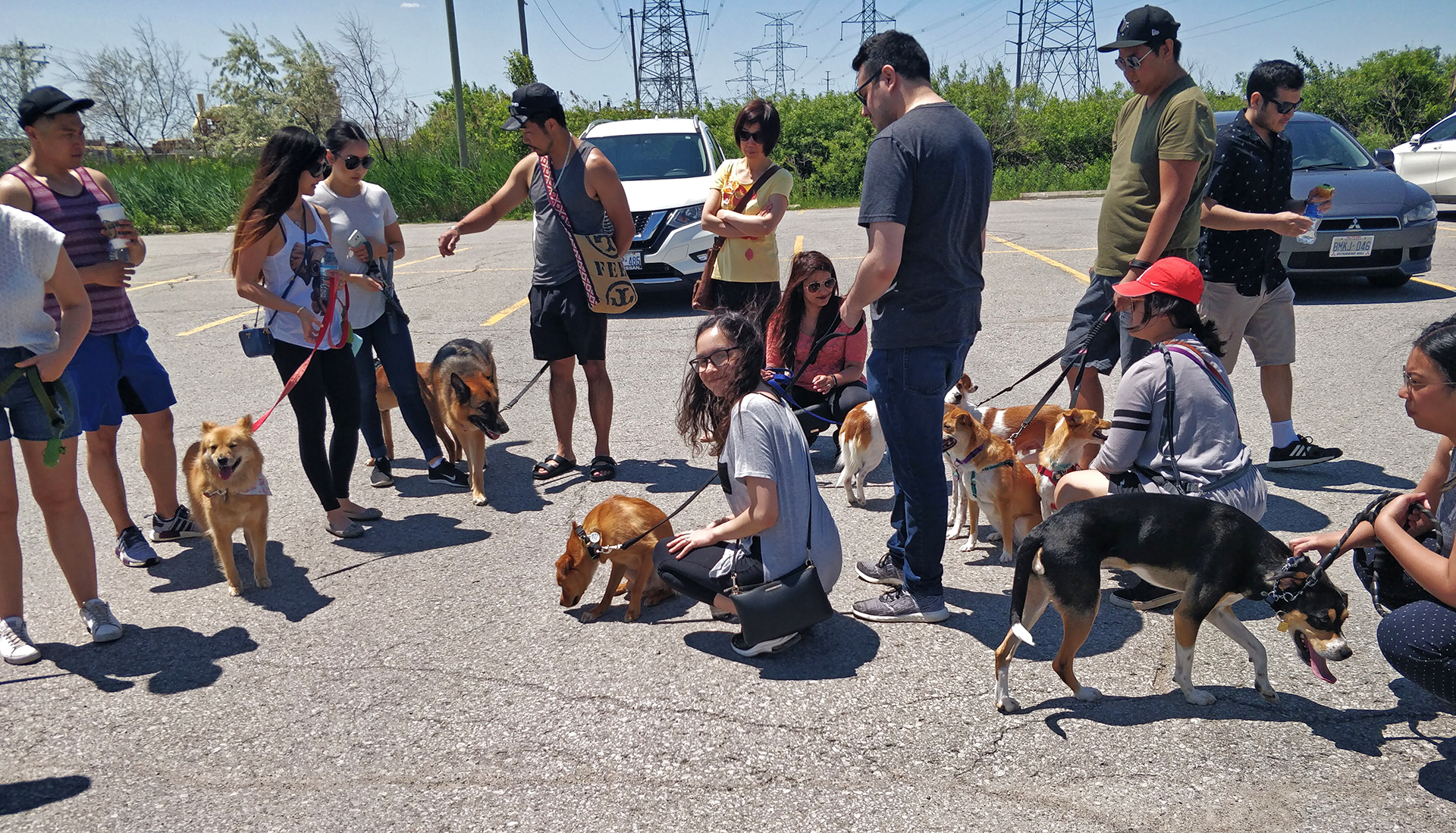 Arriving at the dog park. All the Dongs (including other FKD rescues like Chance and Ozzy, and Charlie's sibling Charlotte) are getting oriented around each other!