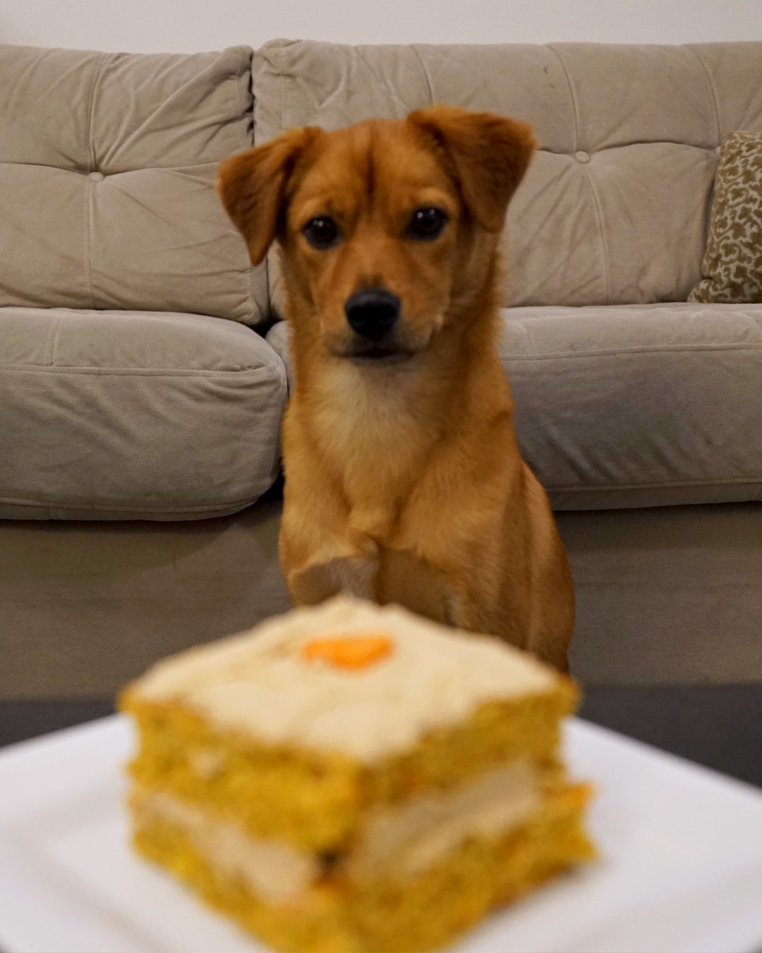 """""""Smells pretty good!"""" - We tried this recipe by Pink Glitter Living from their Pinterest post.It was super fast and easy to make, and even though I left out the honey Zappa seemed to appreciate it all the same!"""