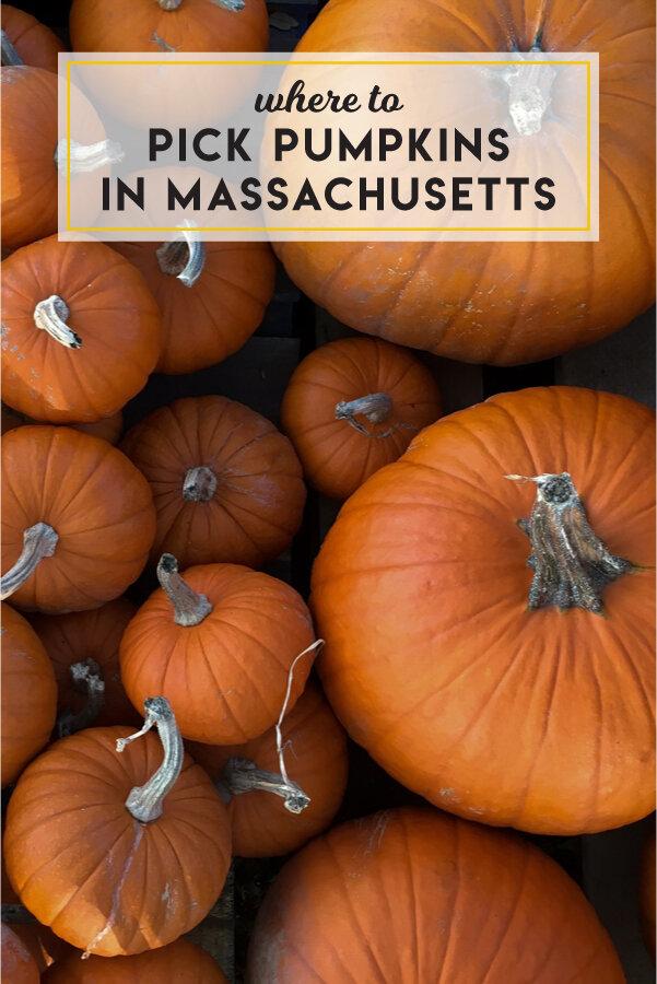pumpkin-patches.jpg