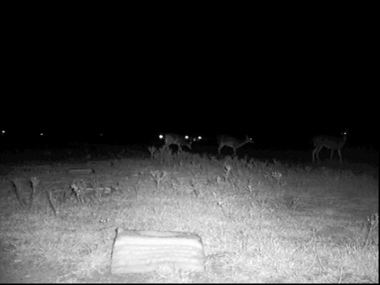 deer_multi.png