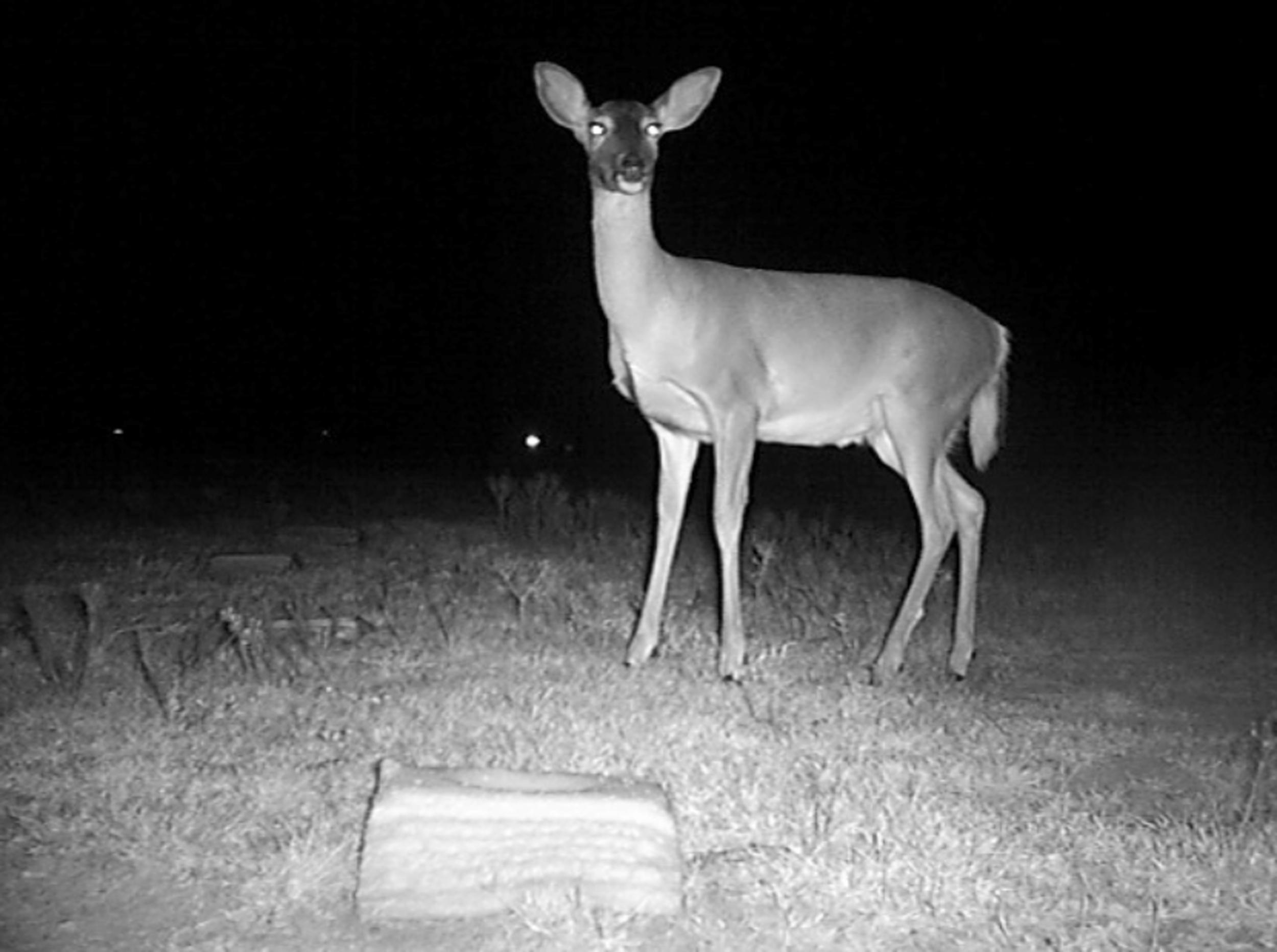 deer_hires.jpg