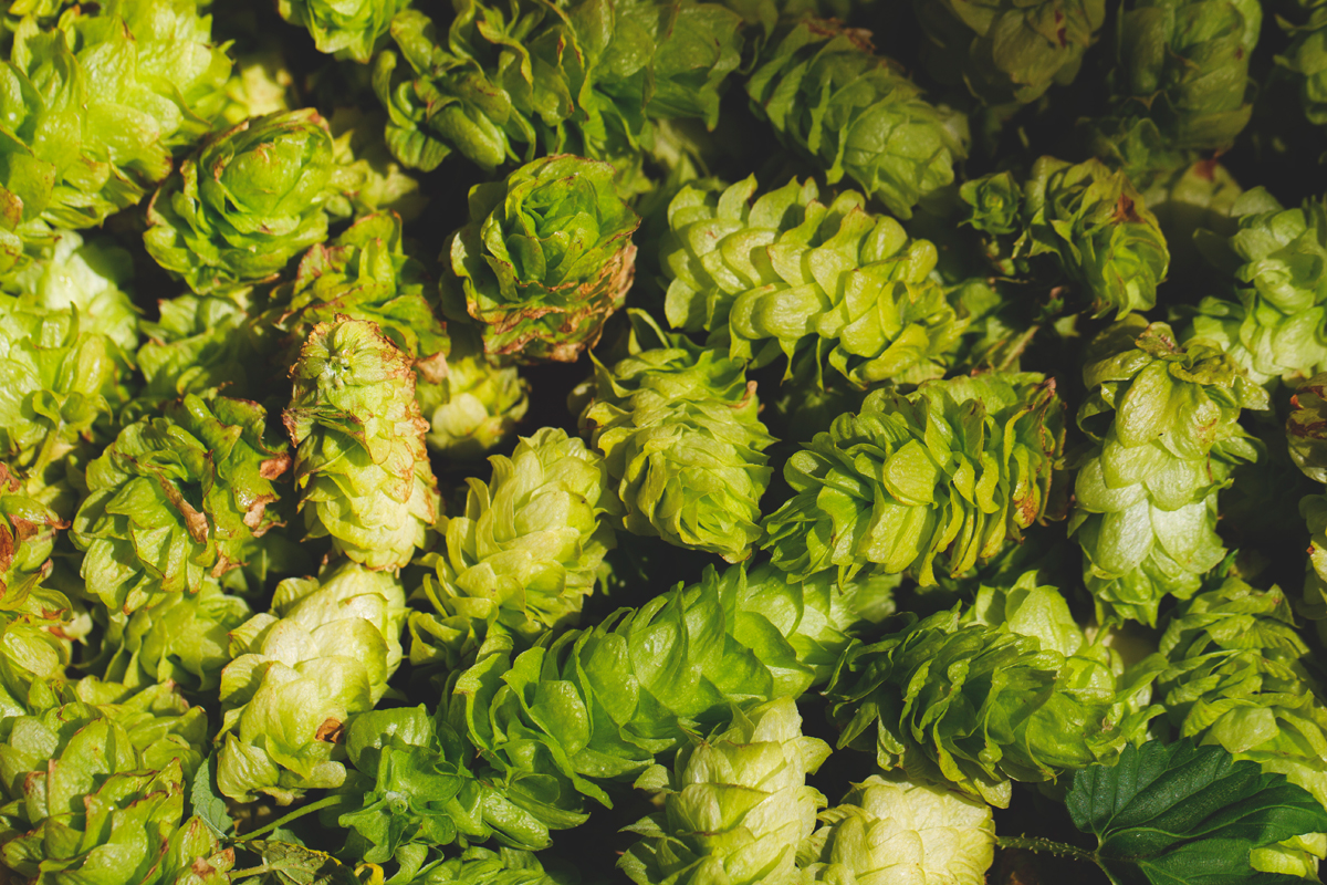 Fresh hops!