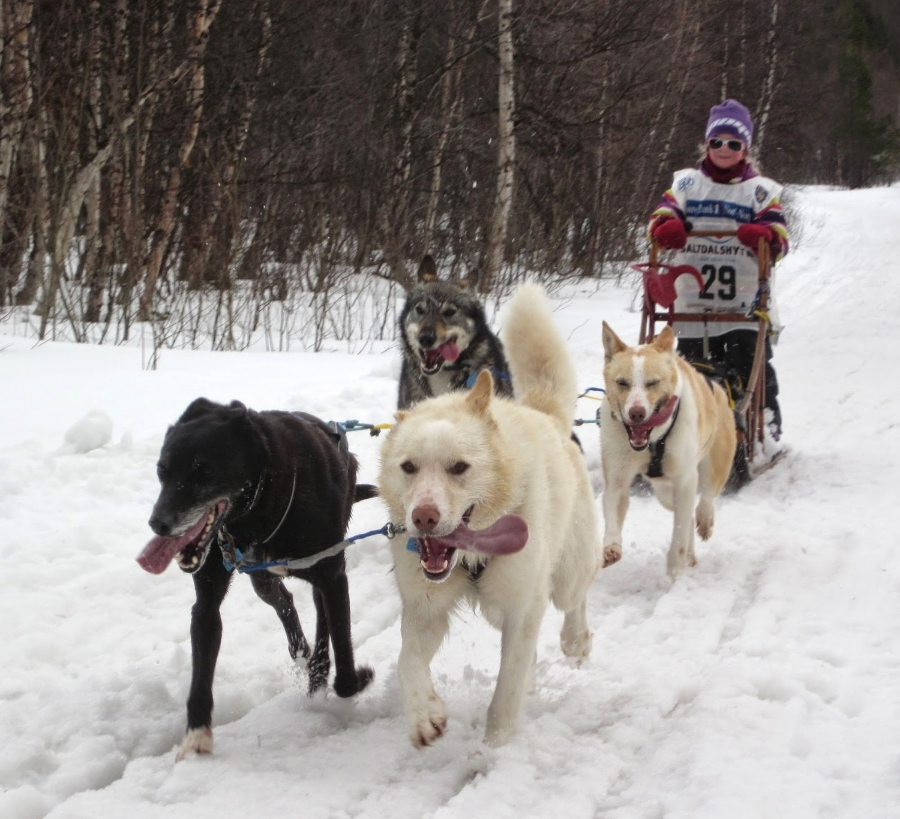 The youngest musher returns